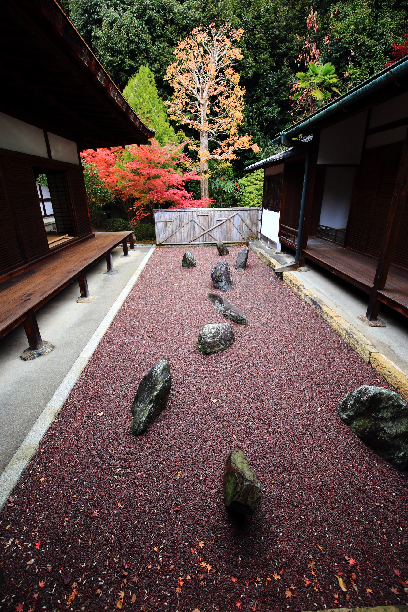 Ryogin-an Temple Kyoto autumn leaves 紅葉 不離の庭 東庭 龍吟庵 秋