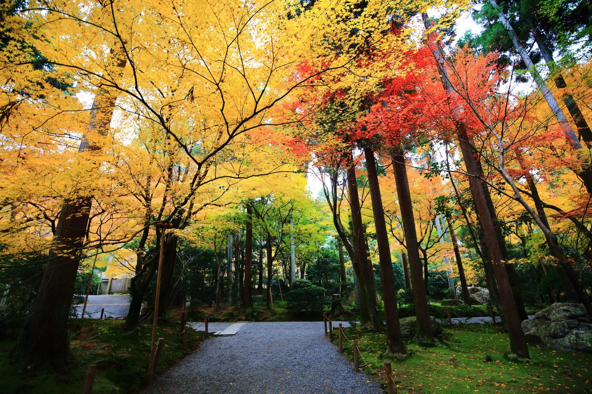 色とりどりの紅葉につつまれた龍安寺の参道