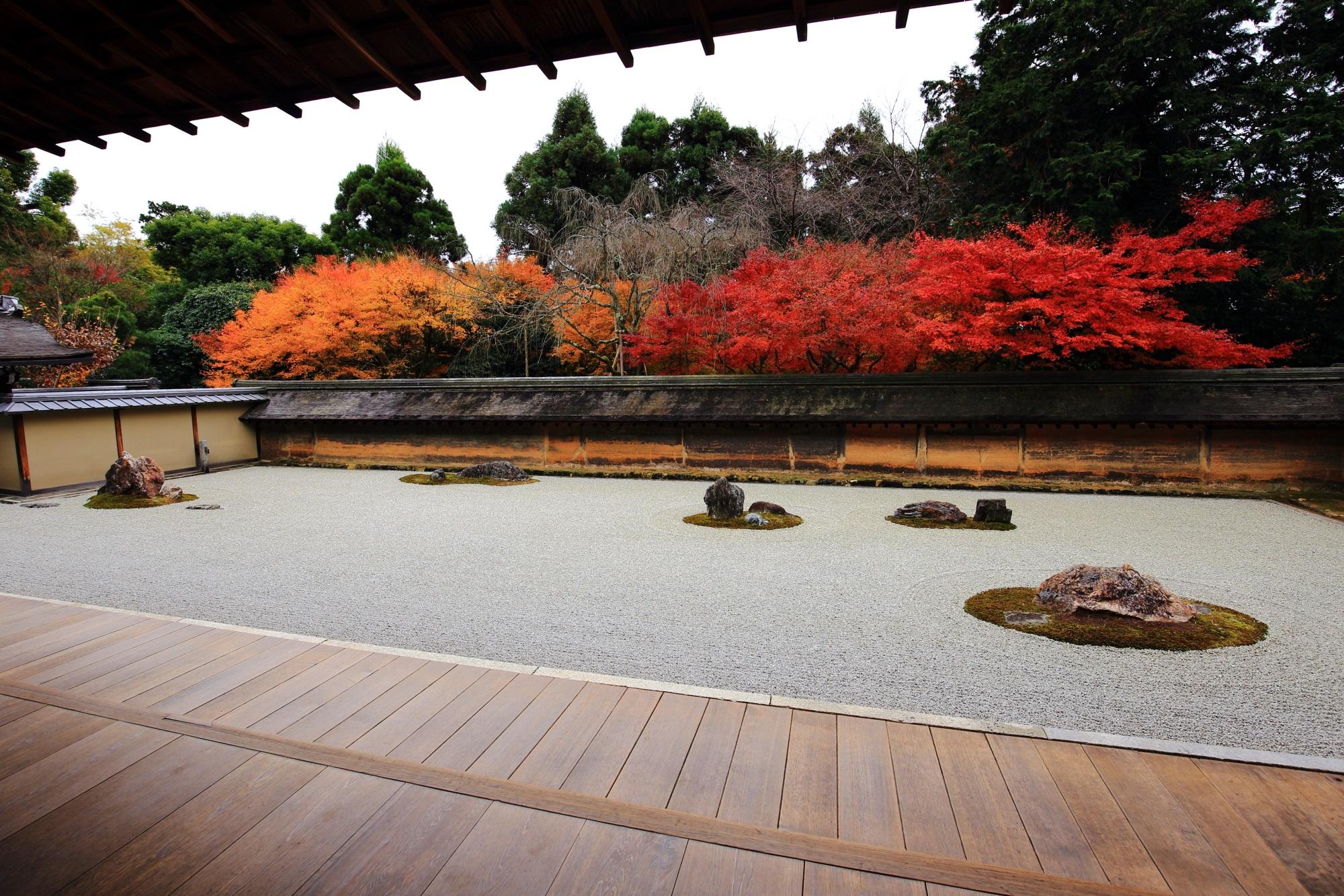 鮮やかな二色の紅葉に染まった龍安寺の石庭