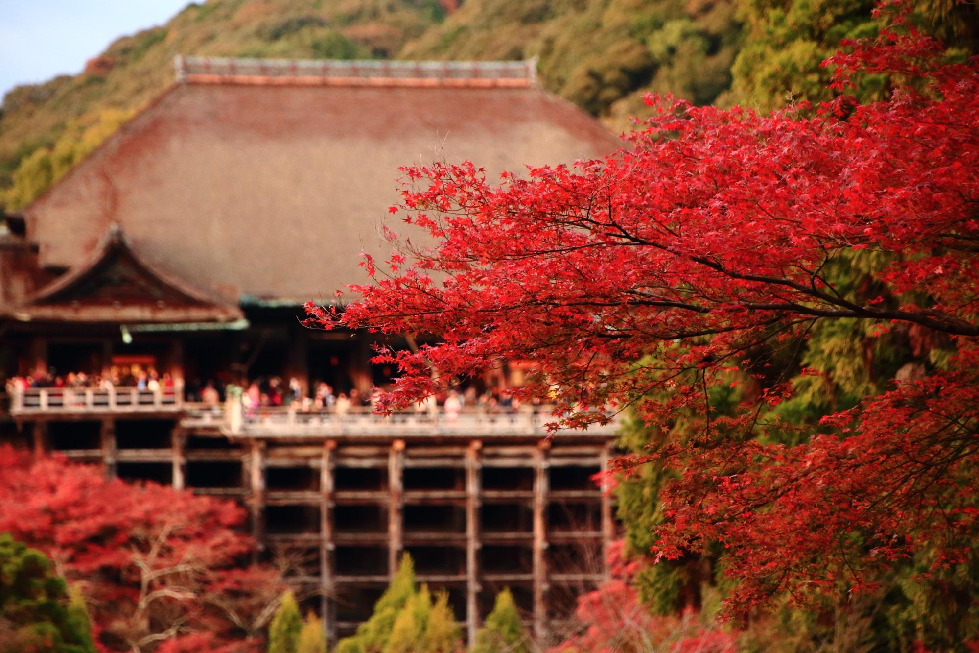 Kiyomizu-dera Temple Kyoto autumn leaves 紅葉 見ごろ 夕焼け 秋