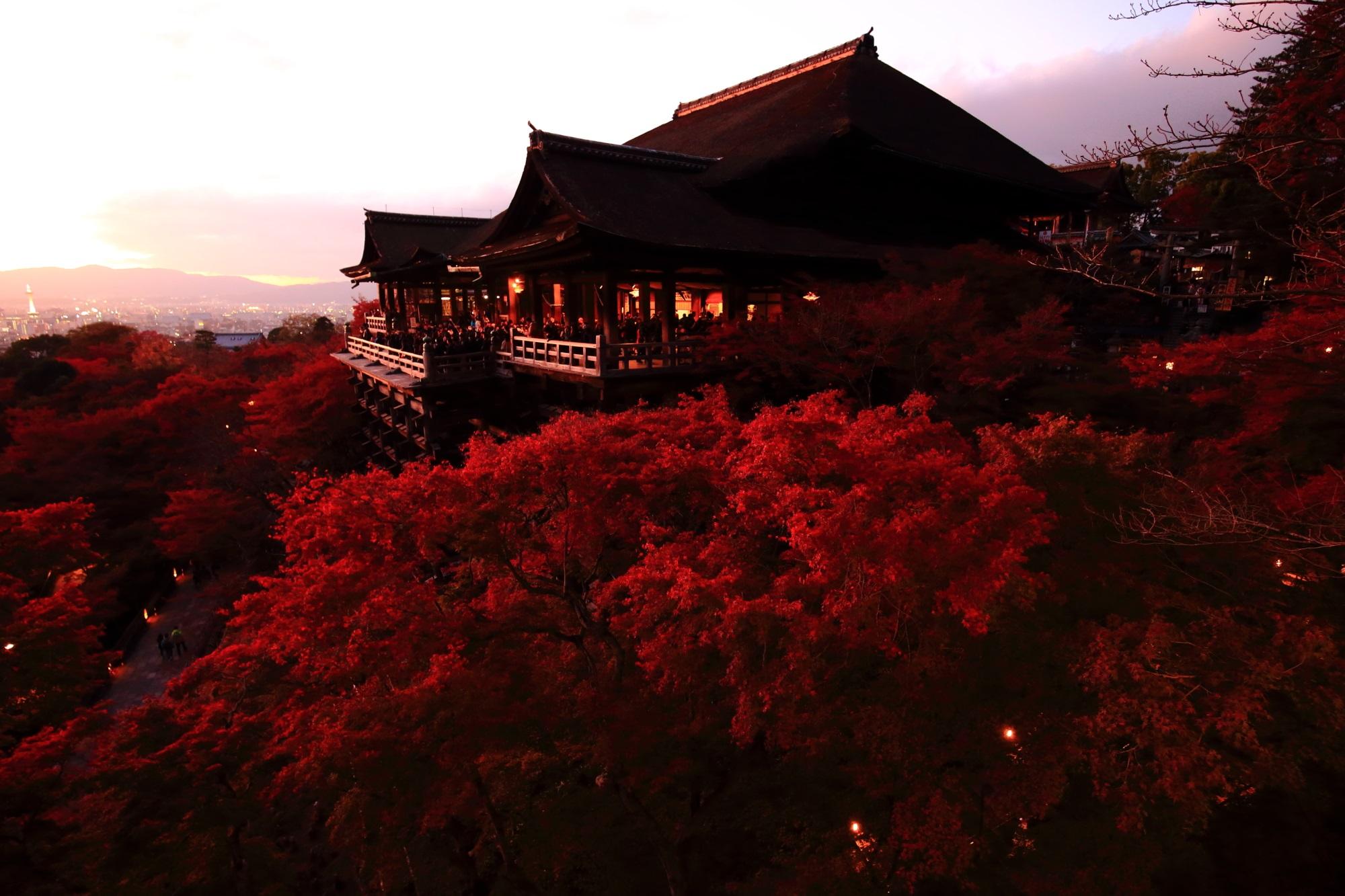 夕焼けと真っ赤な見ごろの紅葉につつまれた清水寺