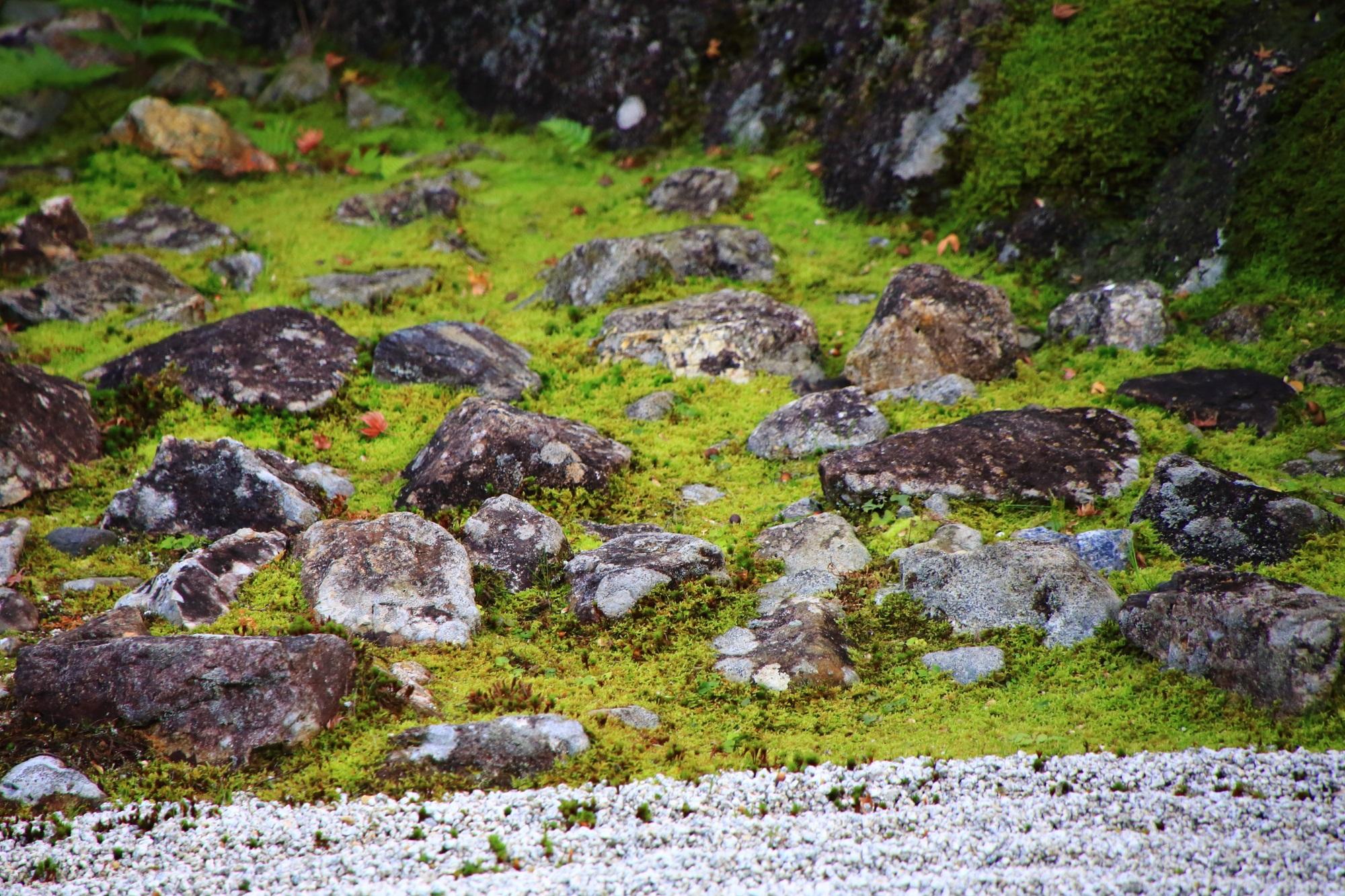 圓徳院の南庭の綺麗な苔と石