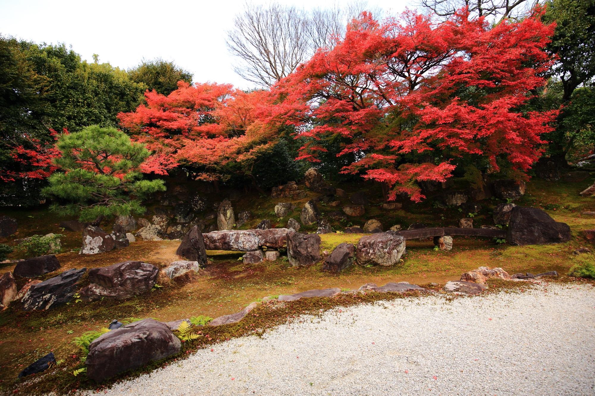 高台寺塔頭の圓徳院の北庭の見ごろの美しい紅葉