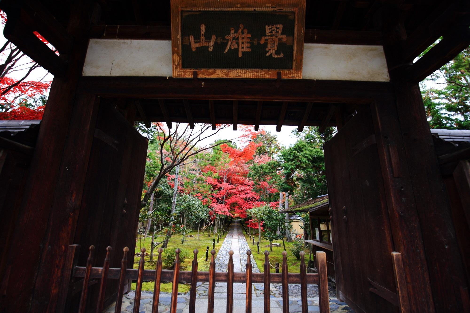 鹿王院の山門と参道の紅葉
