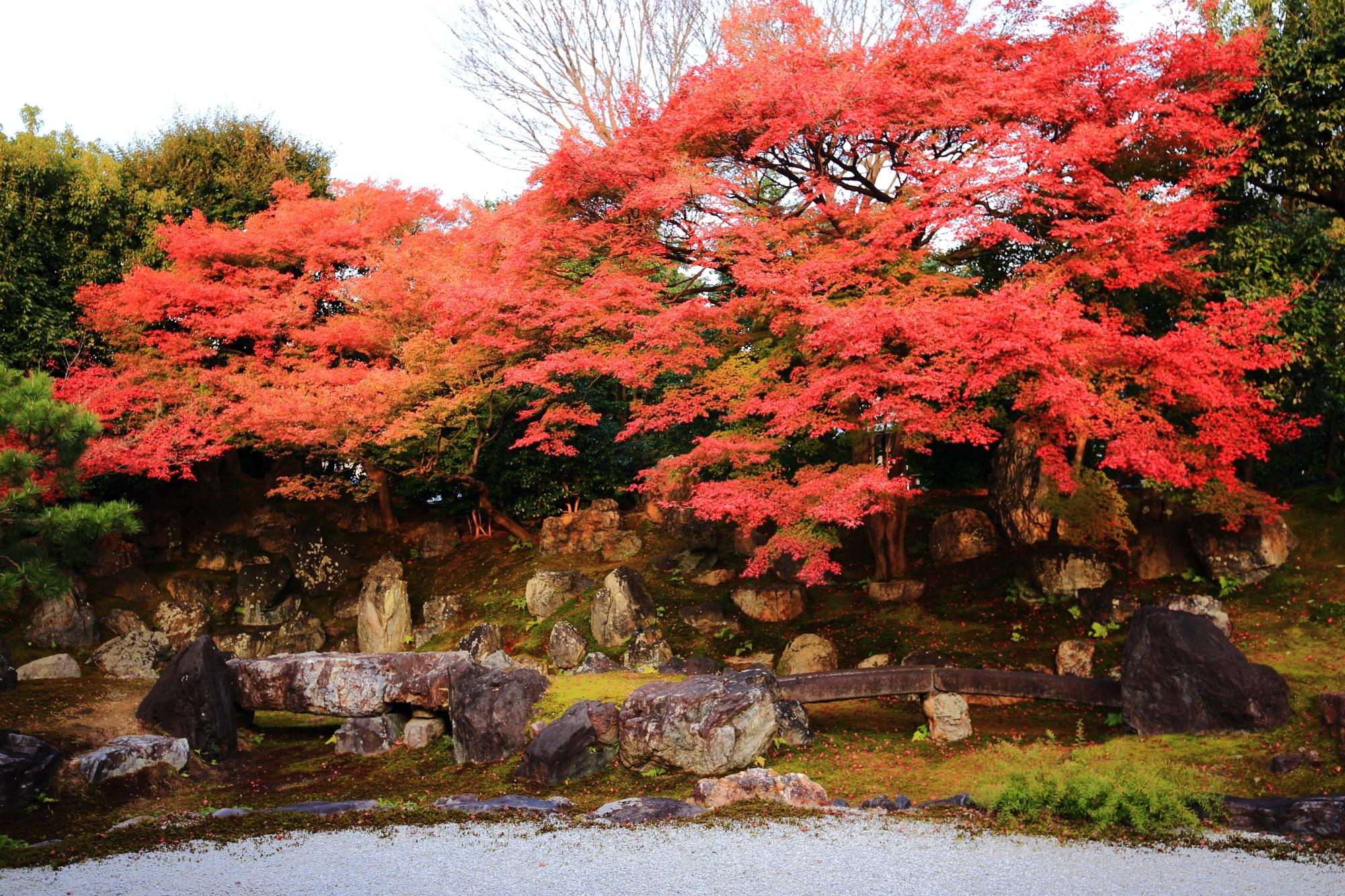 もみじの名所の高台寺塔頭の圓徳院の北庭の見事な赤い紅葉