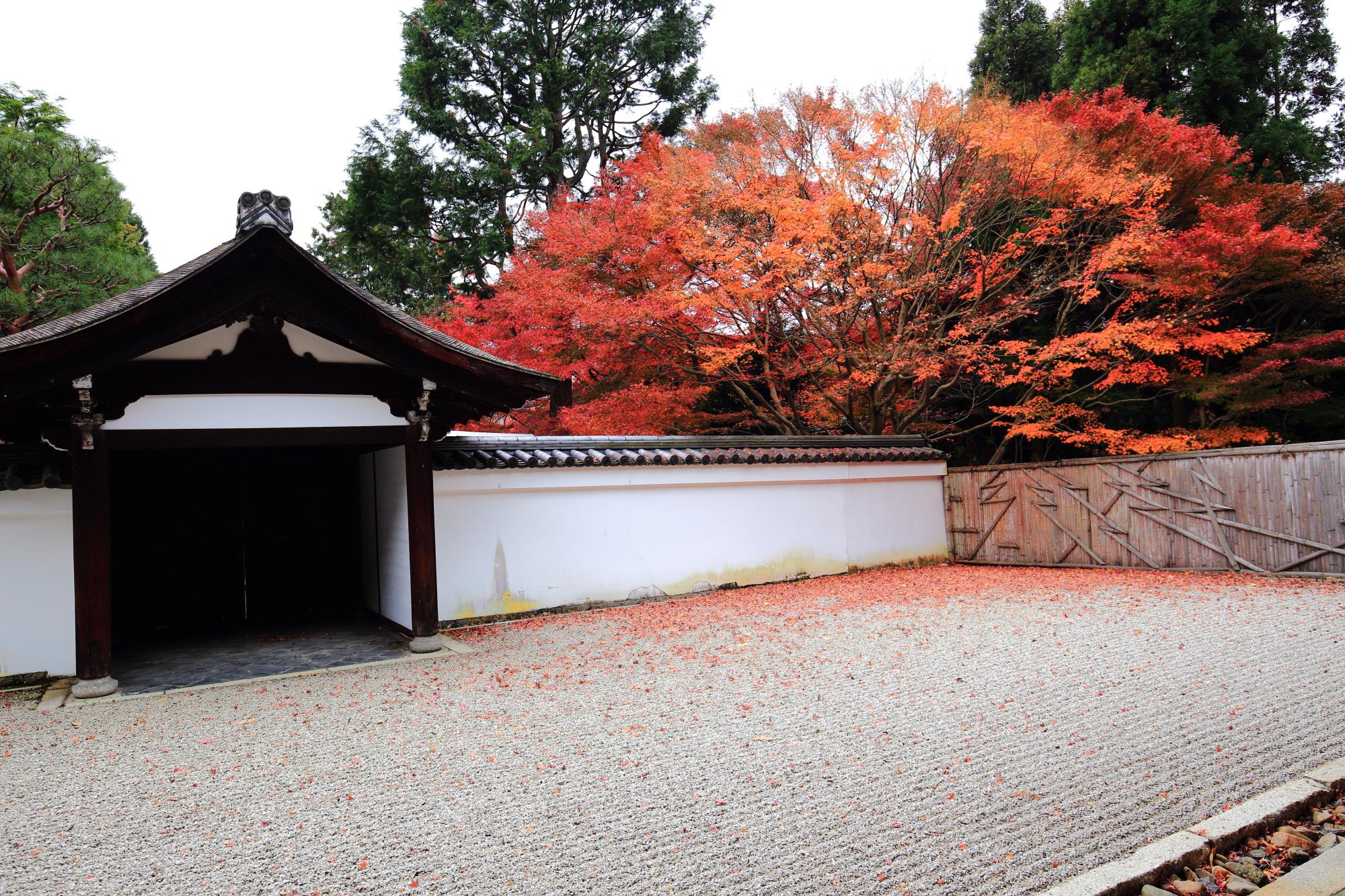 紅葉名所の龍吟庵の南庭「無の庭」の見ごろの紅葉