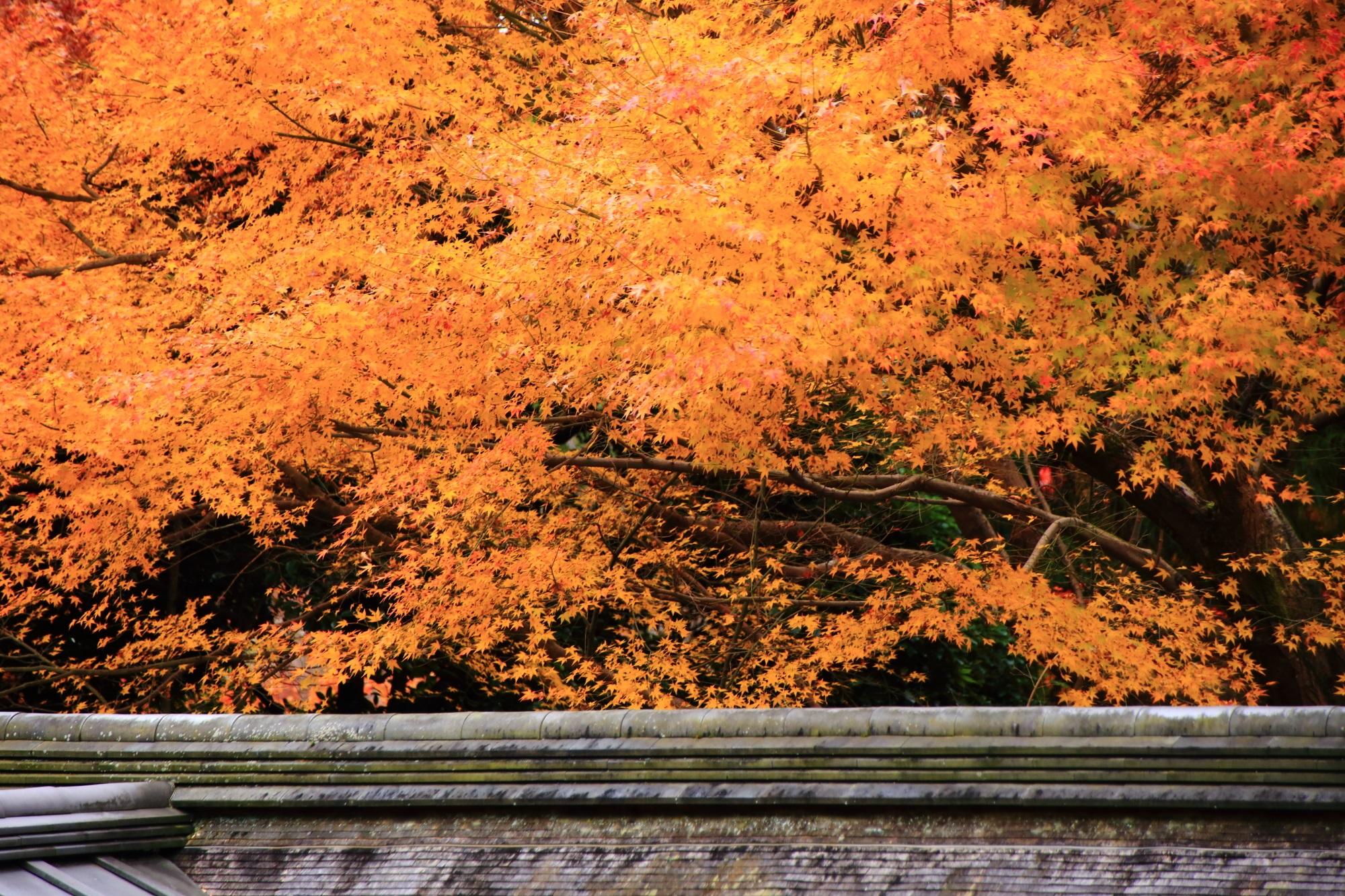 しっとりとした色濃い紅葉