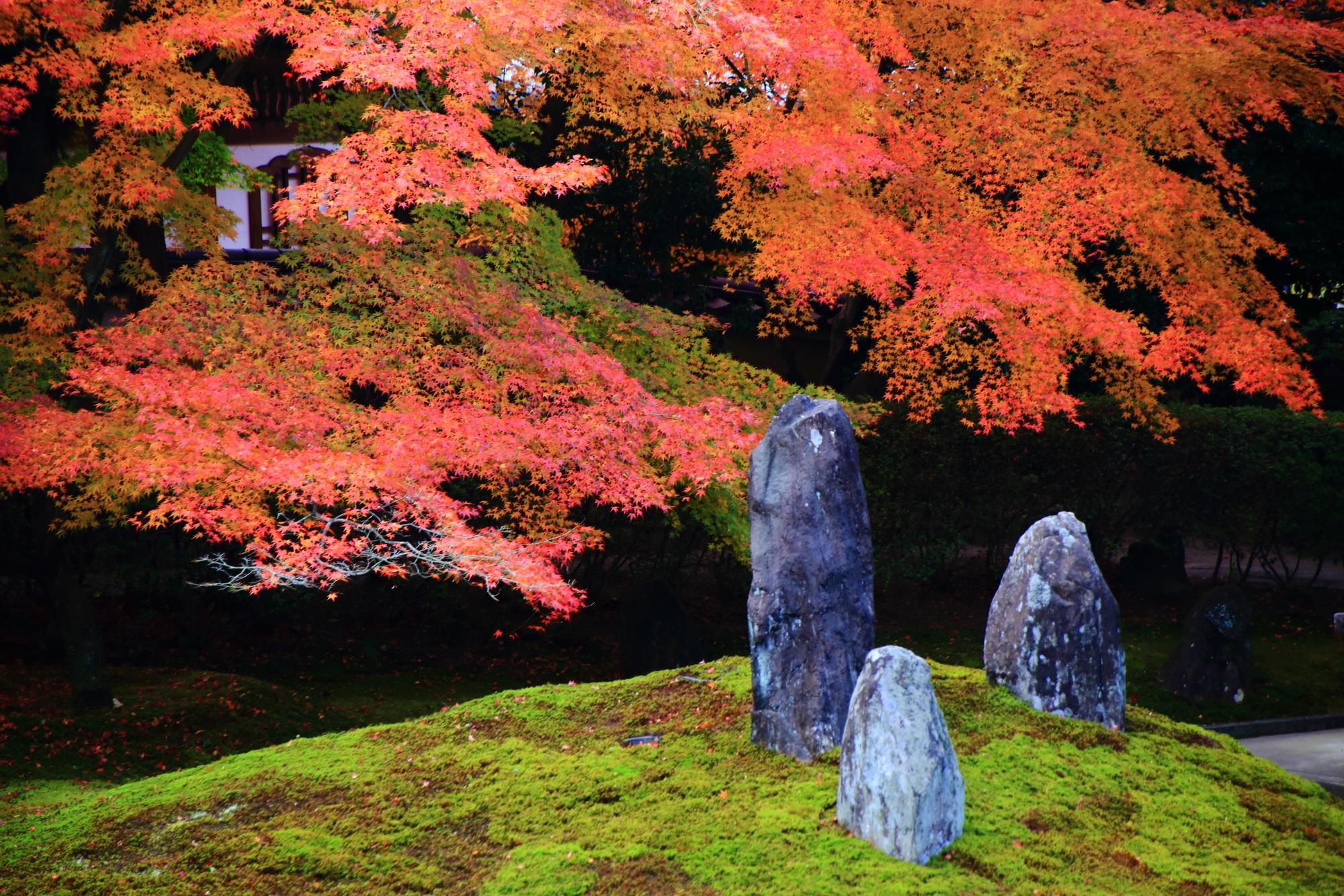 苔の築山と岩を彩る鮮やかな紅葉