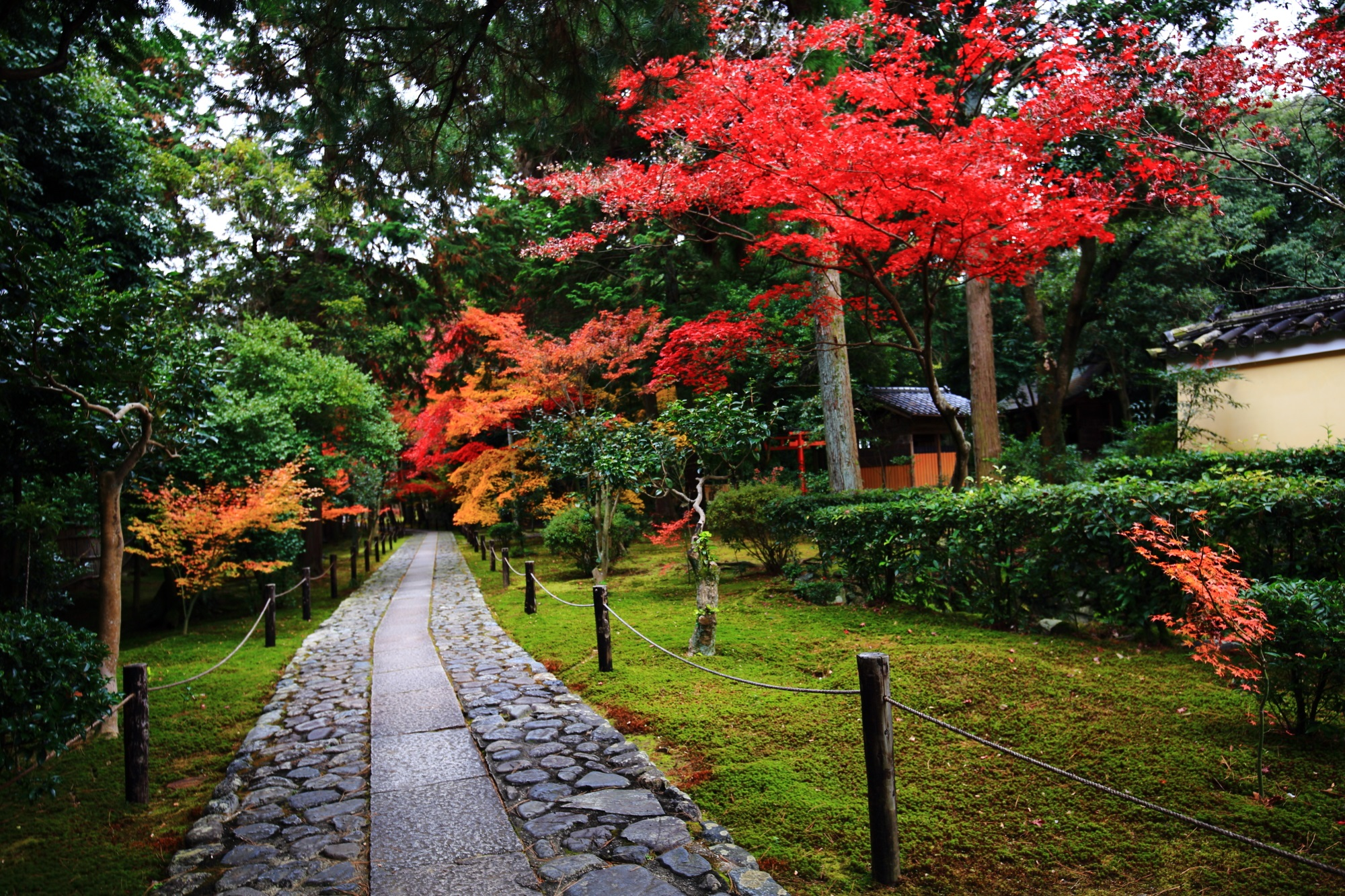 Kyoto Rokuoin-Temple autumn leaves 鮮やか もみじ 参道 秋 見ごろ