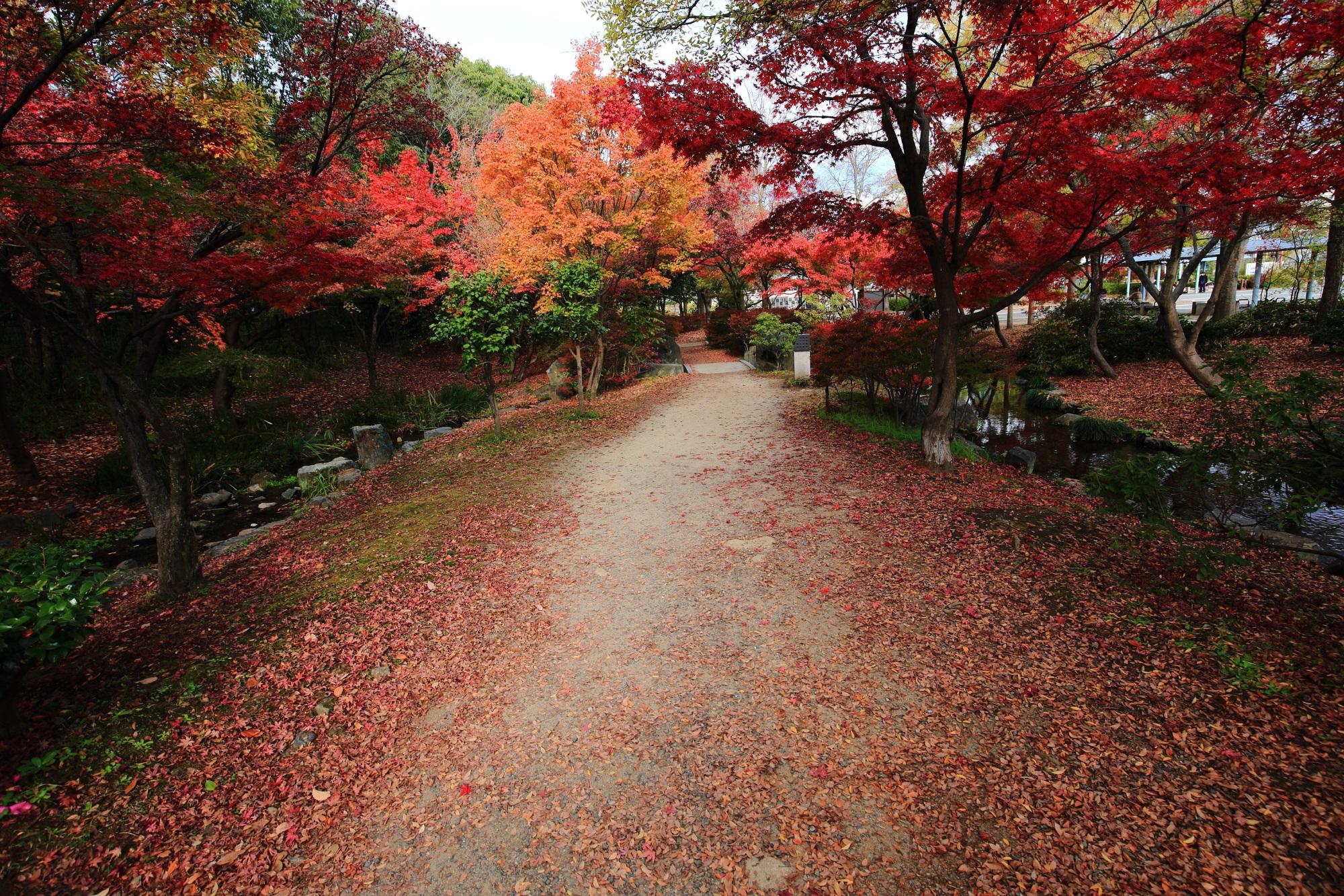 隠れた紅葉名所の梅小路(うめこうじ)公園の見ごろの鮮やかな紅葉
