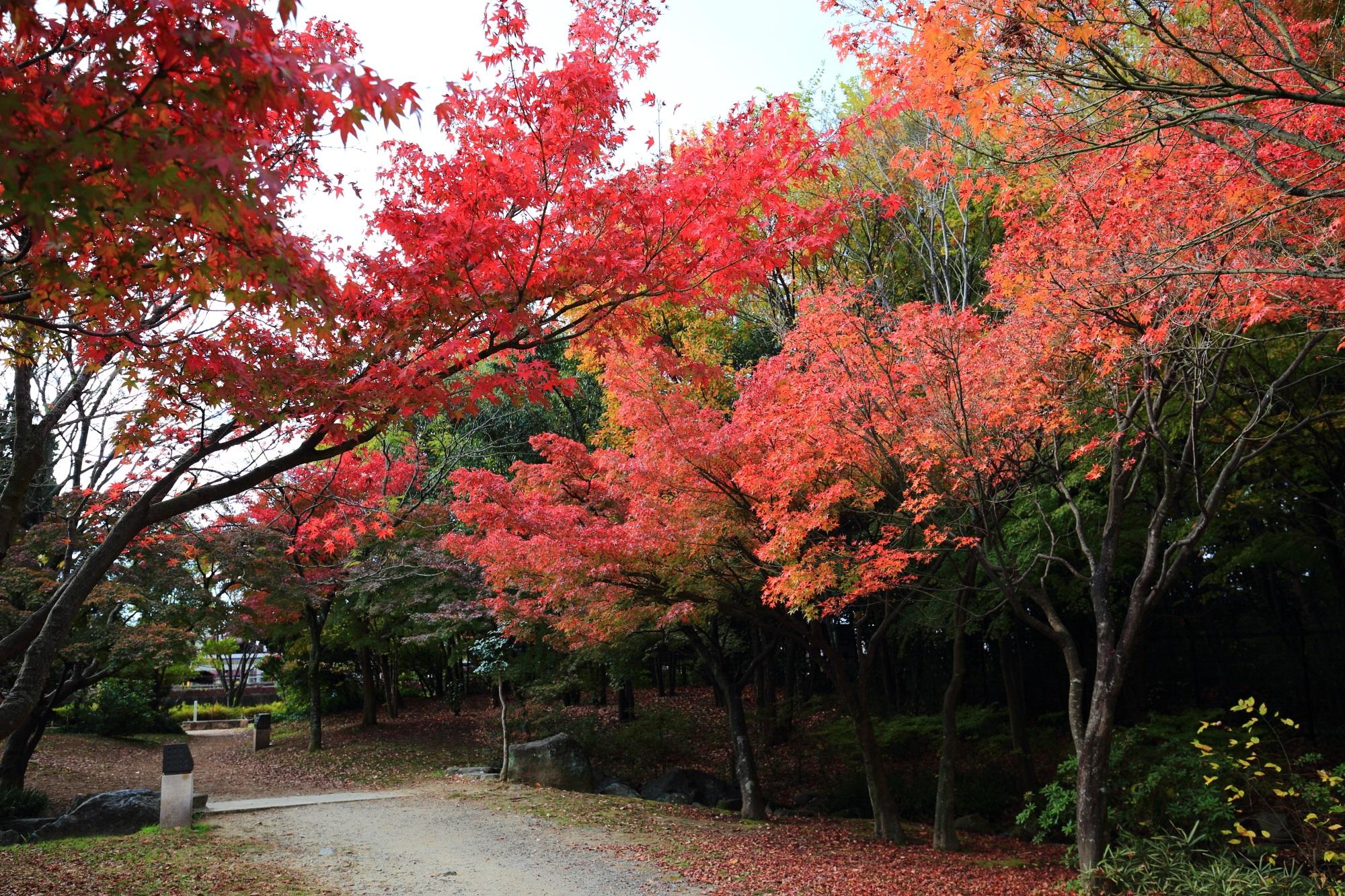 Umekoji-Park Kyoto 紅葉 見ごろ