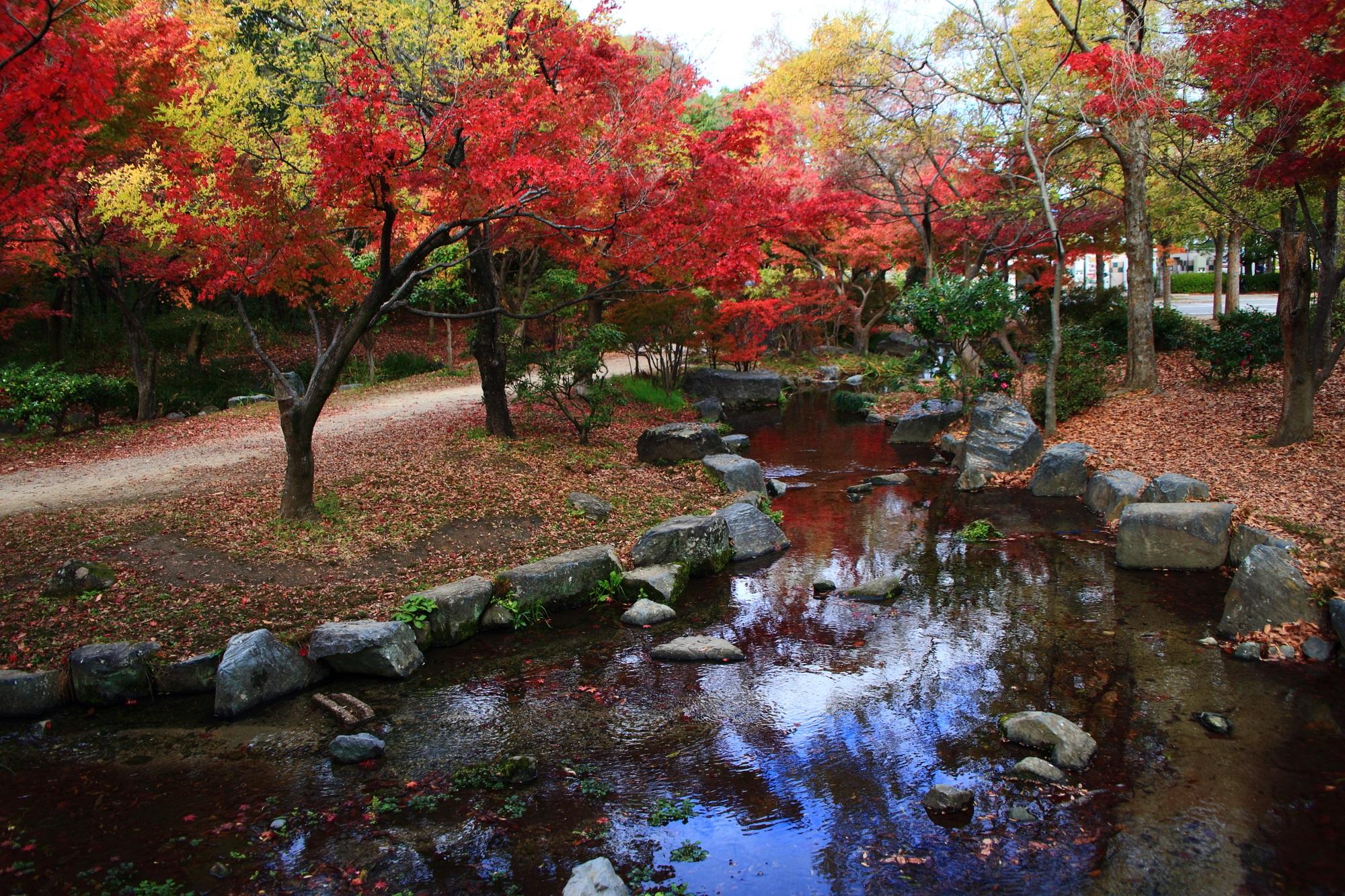 紅葉の名所の梅小路公園の美しい水鏡と紅葉