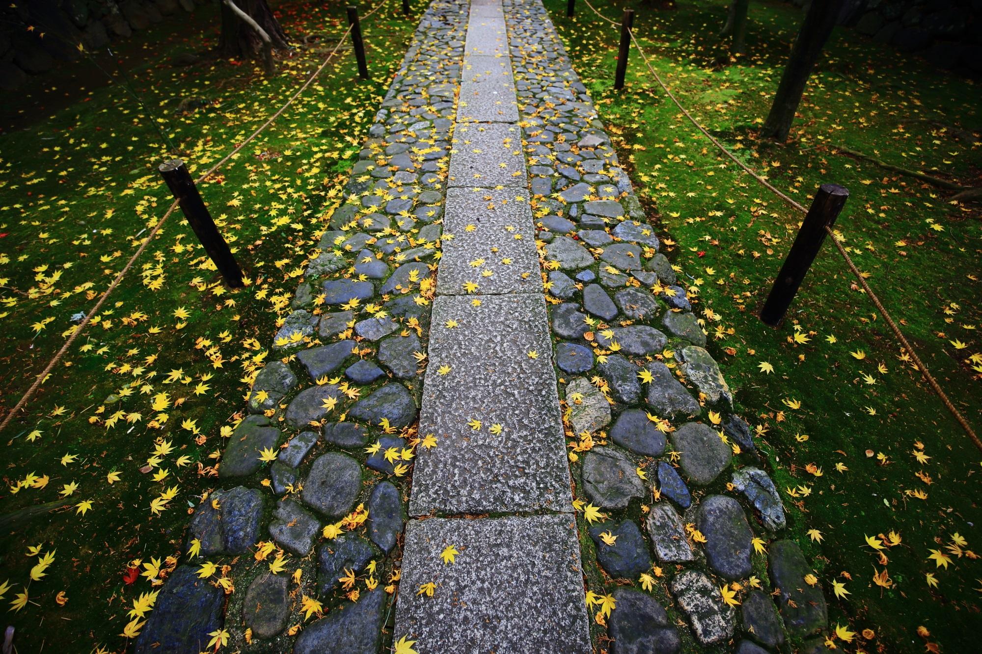 嵐山の鹿王院の参道の見事な黄色い散りもみじ