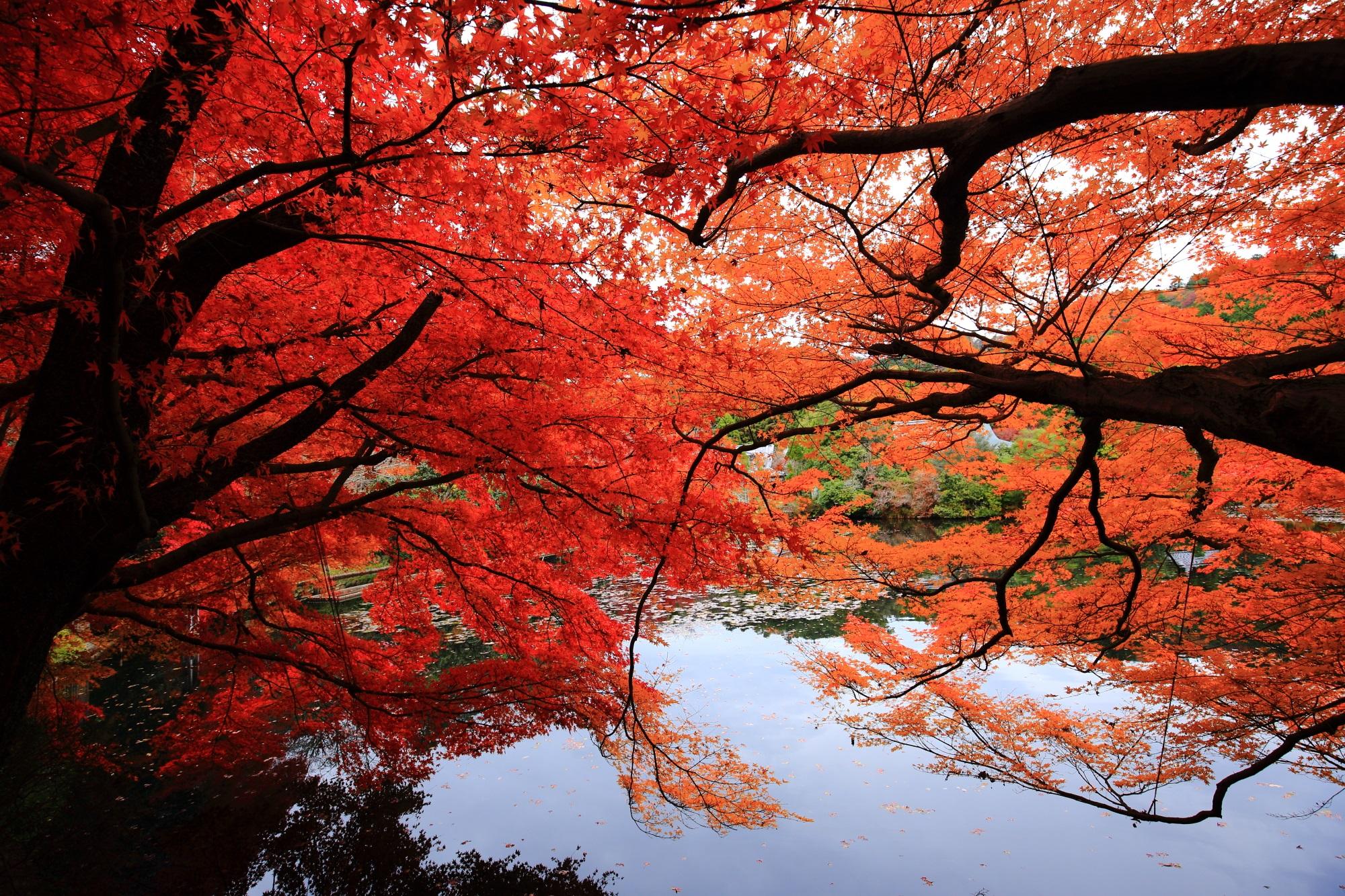 見ごろの紅葉につつまれた龍安寺の鏡容池