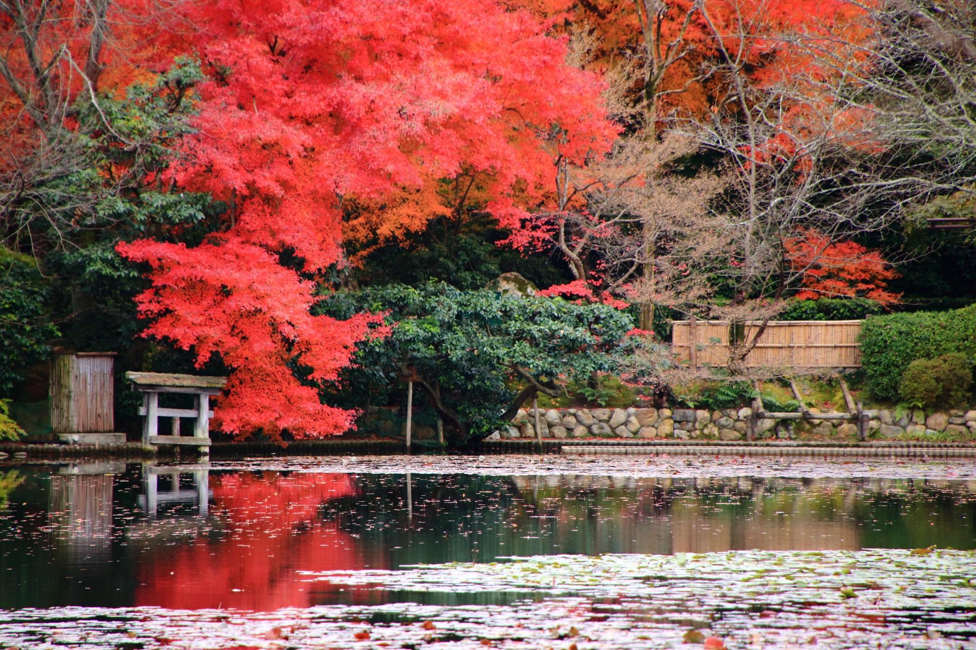 水面すれすれの真っ赤な紅葉
