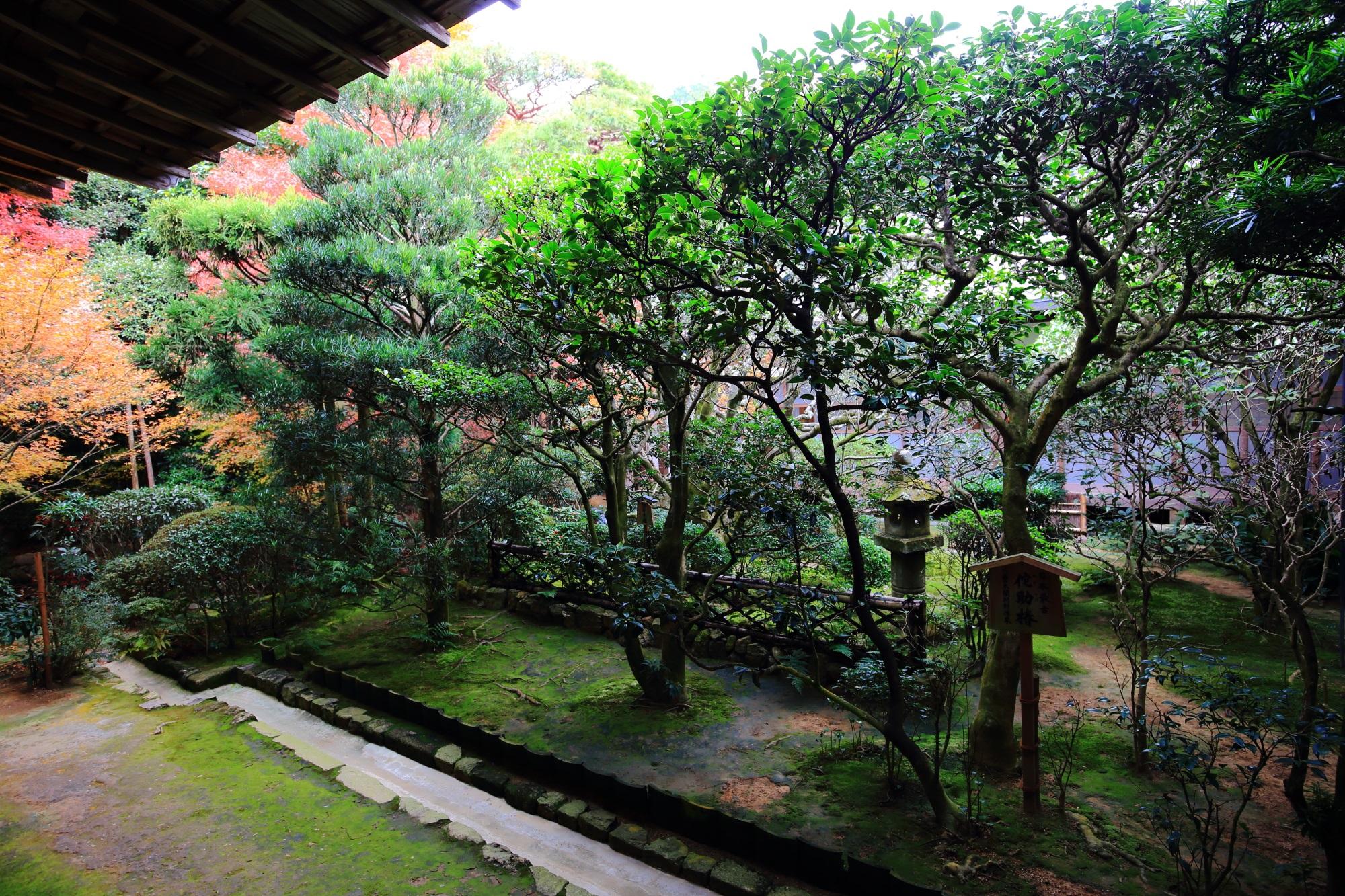 龍安寺の方丈の侘助椿(わびすけつばき)