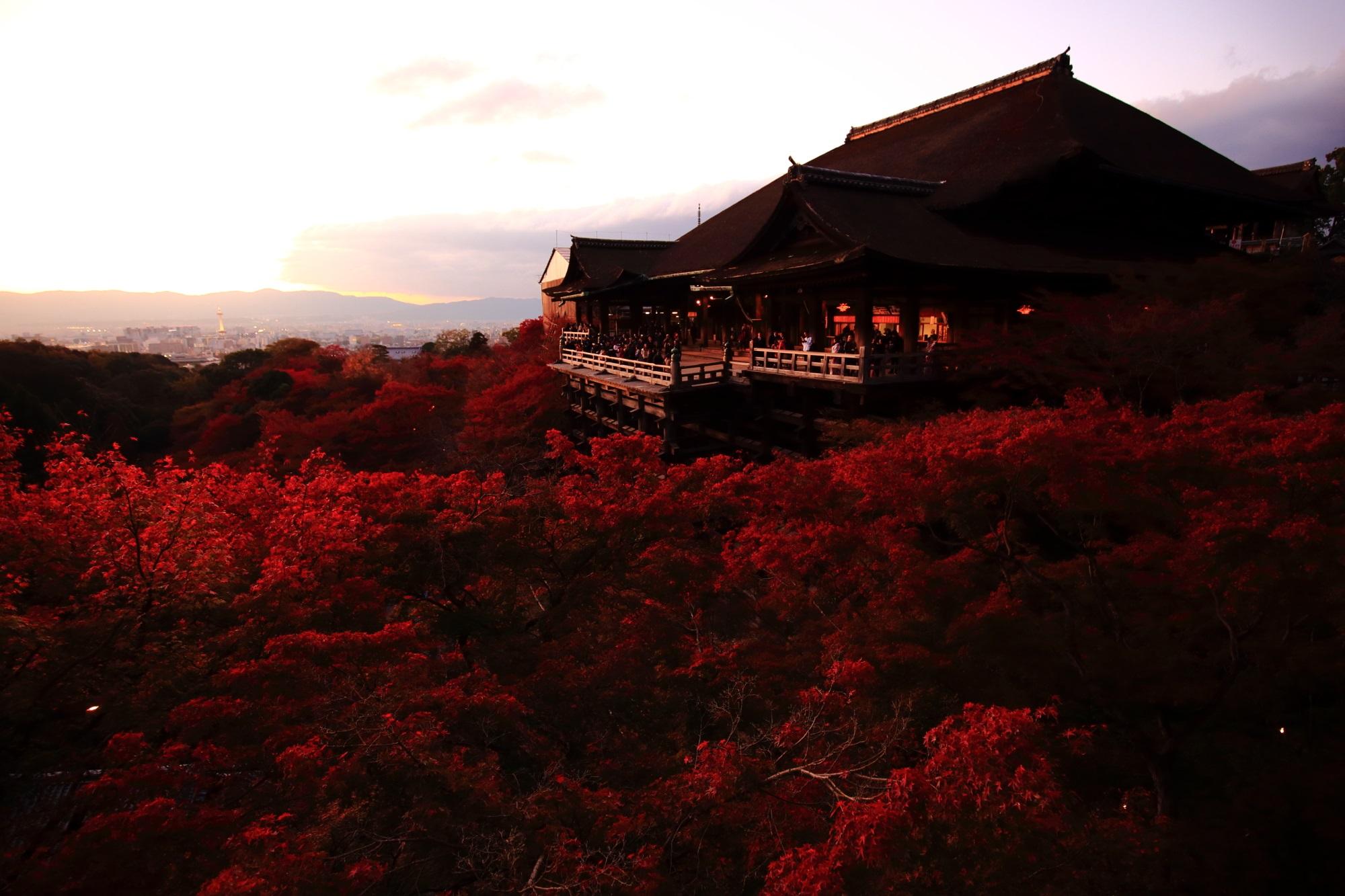 清水寺の夕焼けで赤く染まった見ごろの紅葉