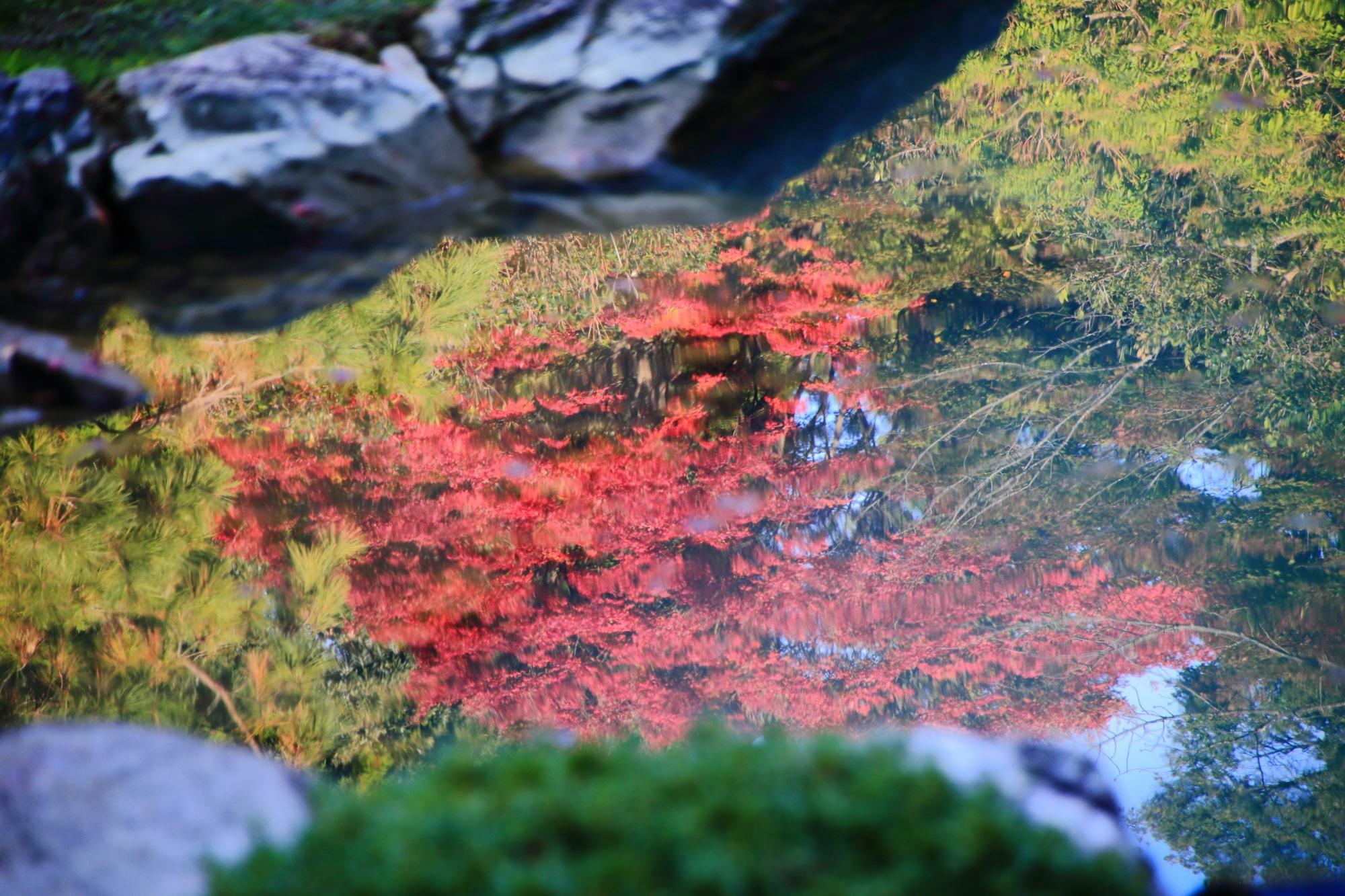 青蓮院の龍心池の美しい紅葉の水鏡