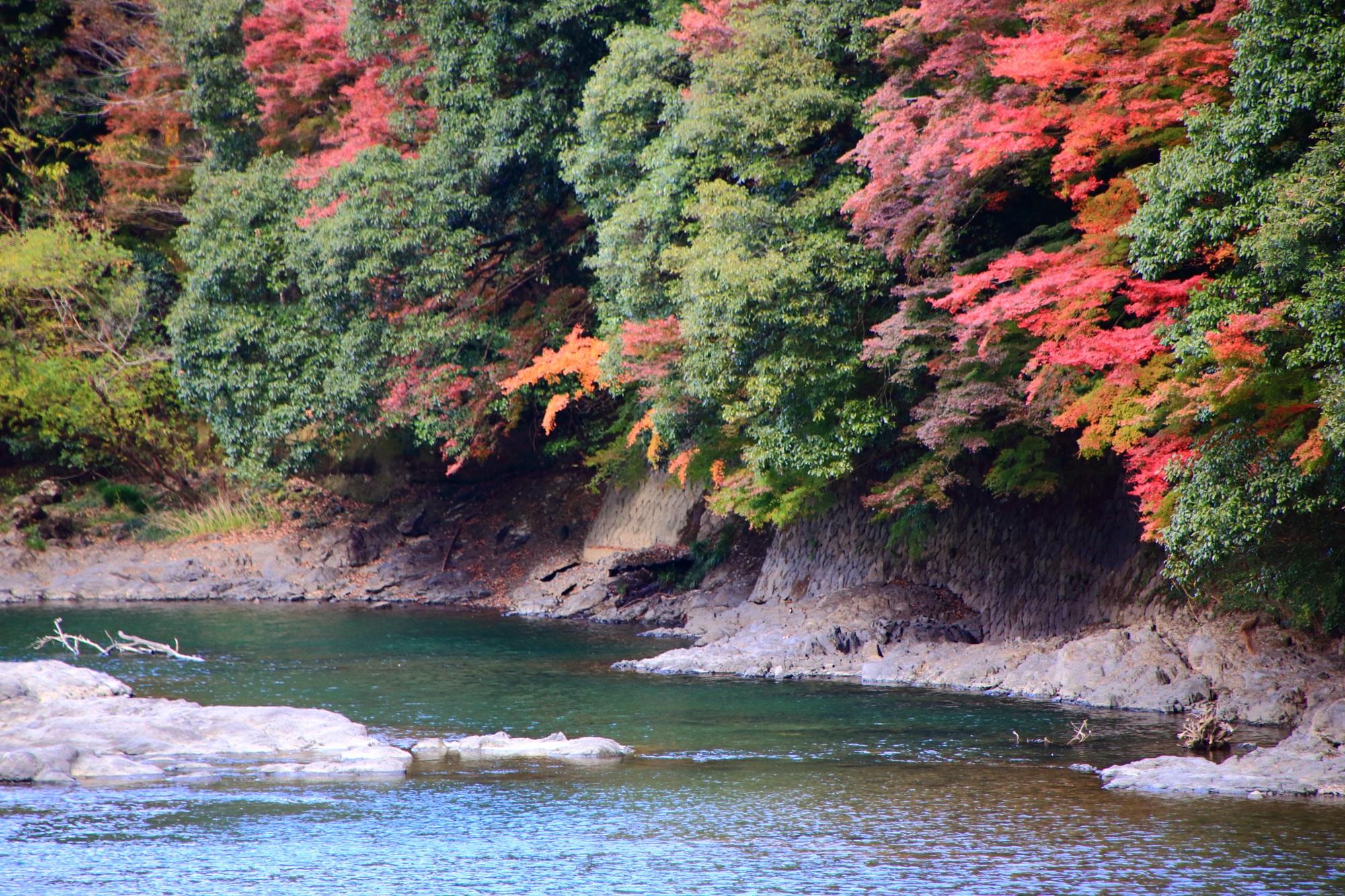 Uji-River Kyoto autumn leaves 紅葉 見ごろ 宇治川 秋