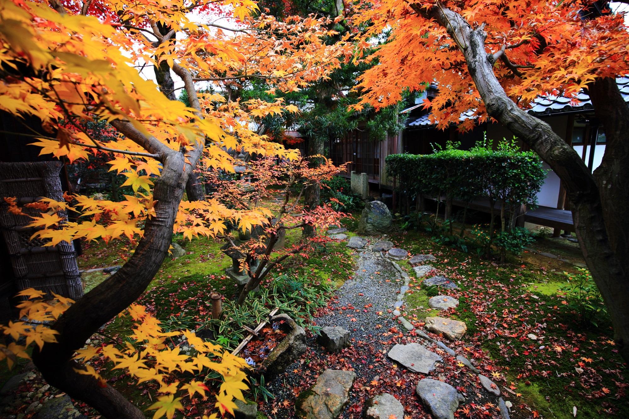 綺麗な紅葉につつまれた鹿王院の茶庭