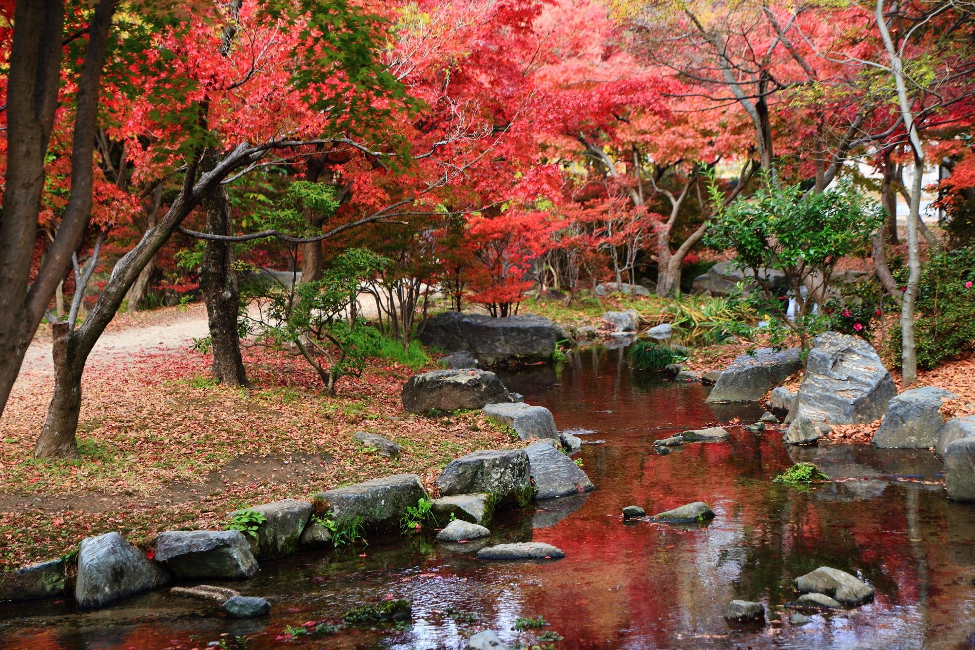 梅小路公園の美しい小川に映る紅葉