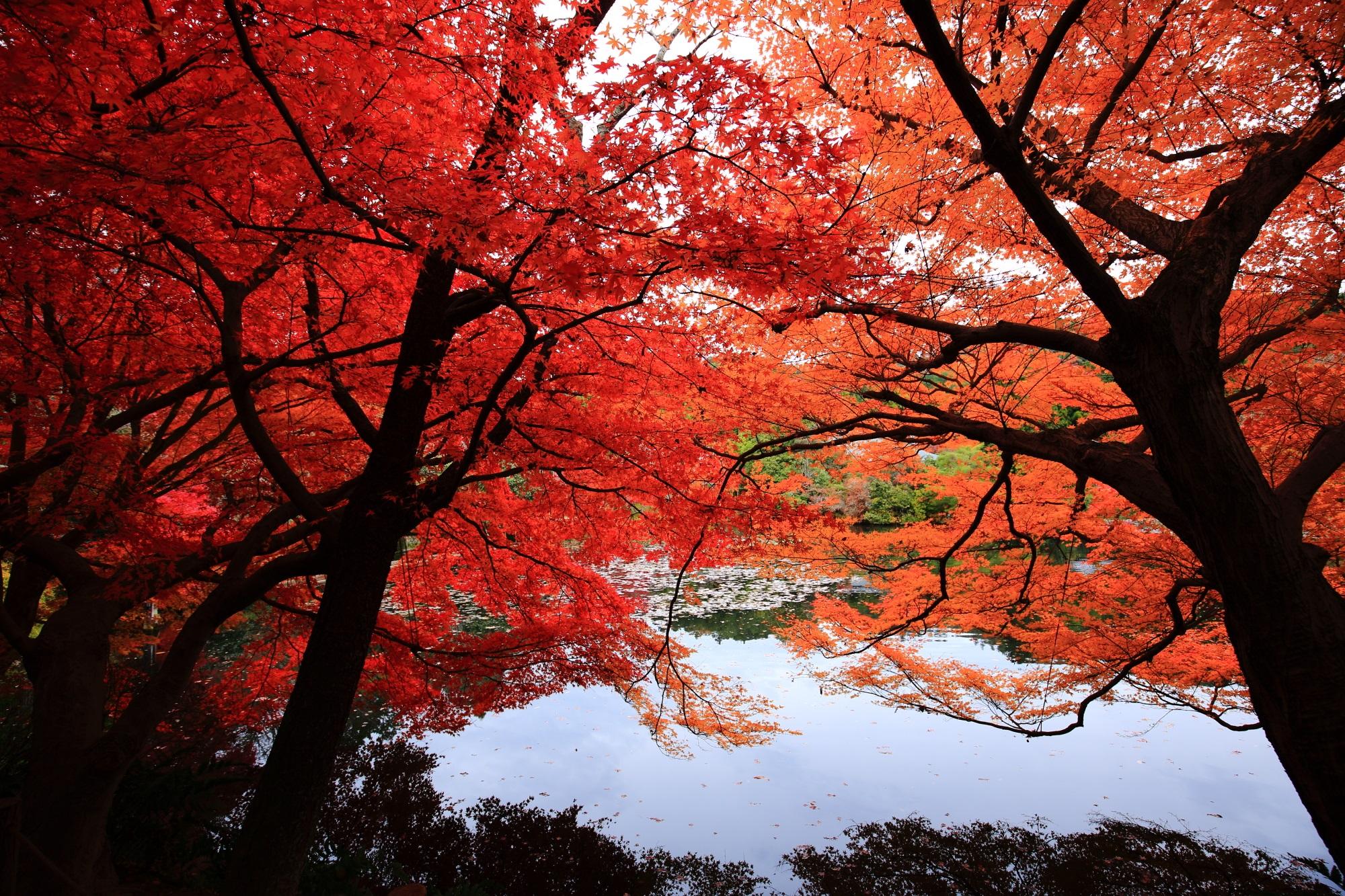 水面にせり出す紅葉