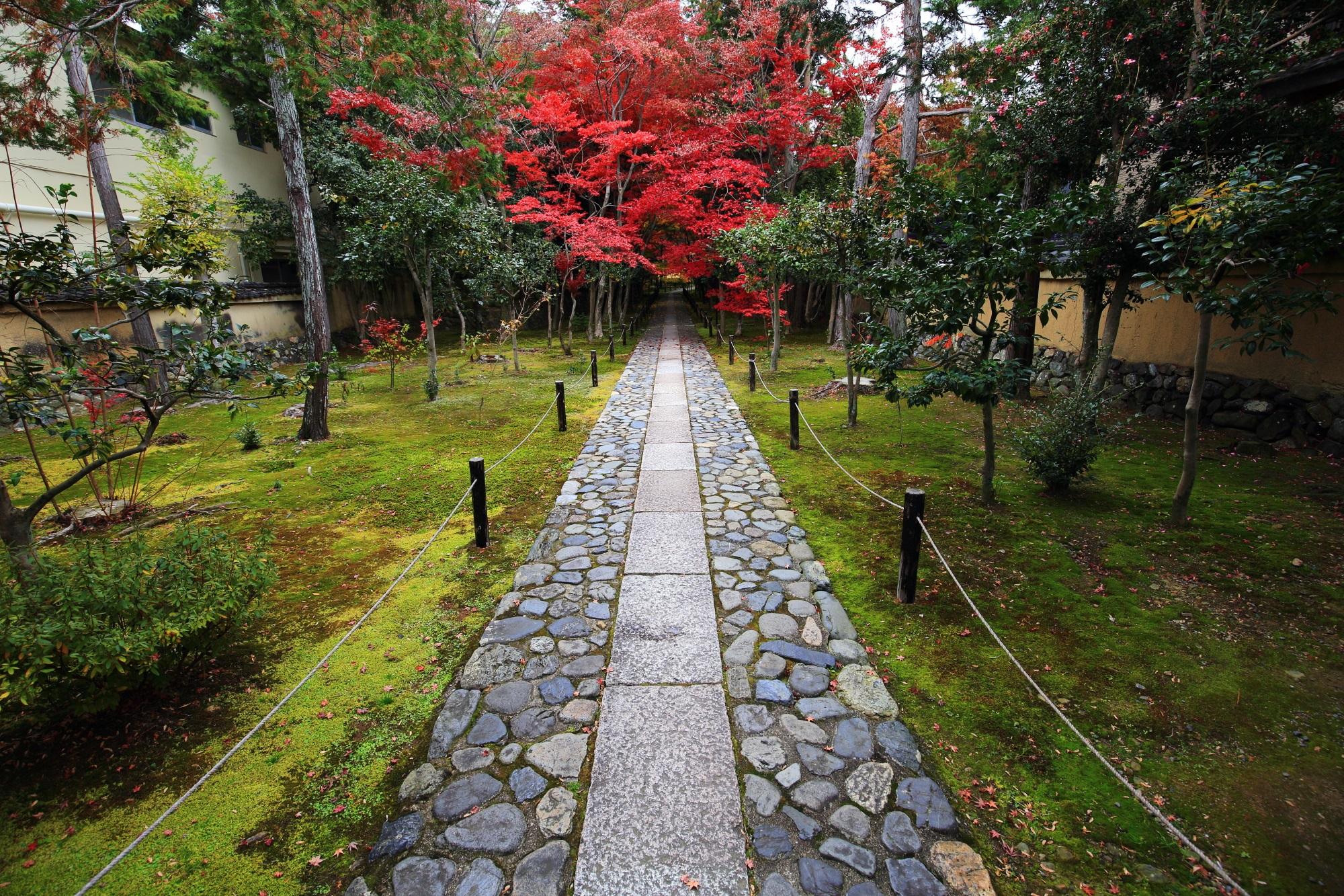 紅葉の穴場の鹿王院の参道の見ごろの紅葉