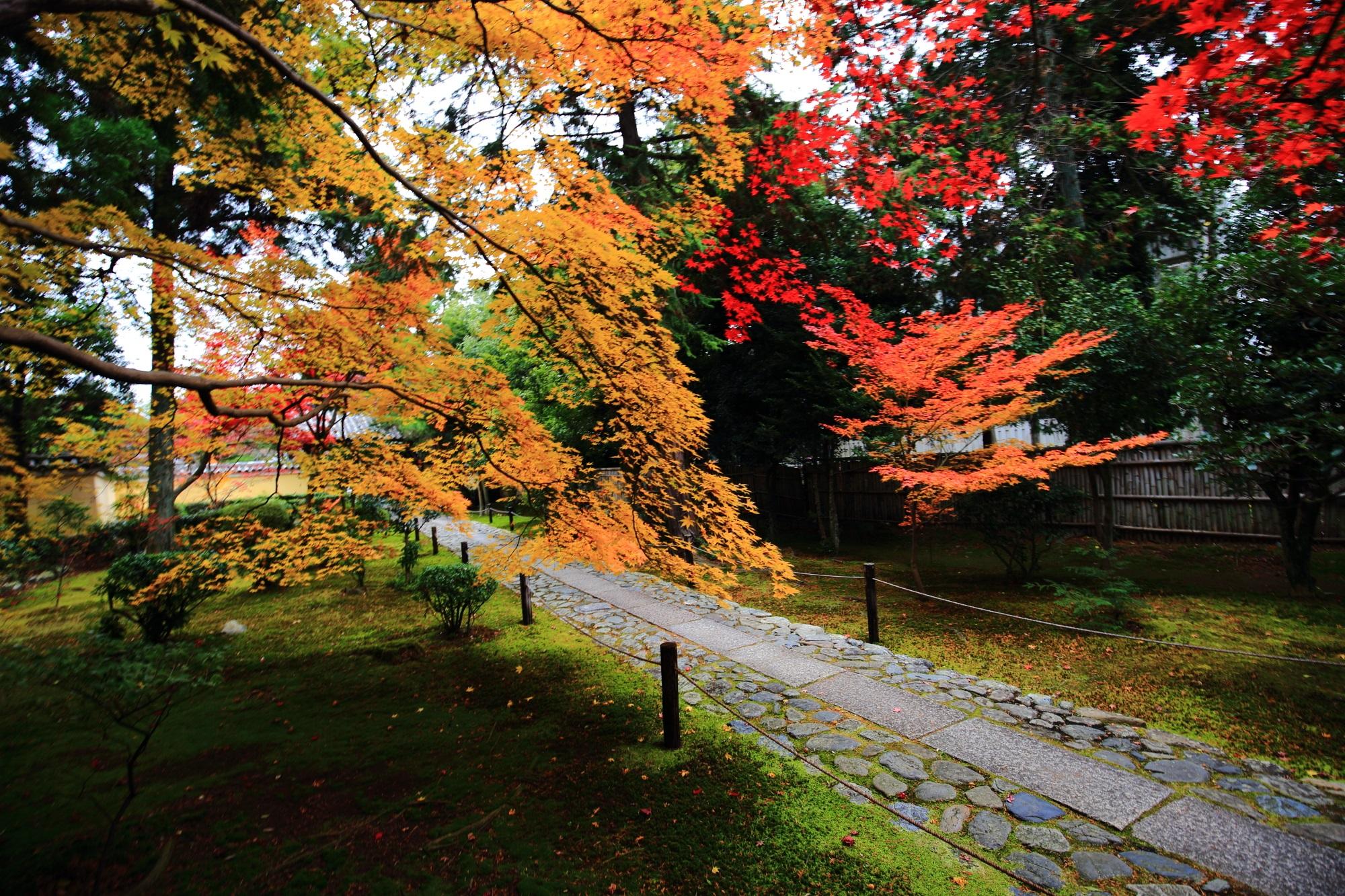 ろくおういんの参道の見ごろの色とりどりの紅葉