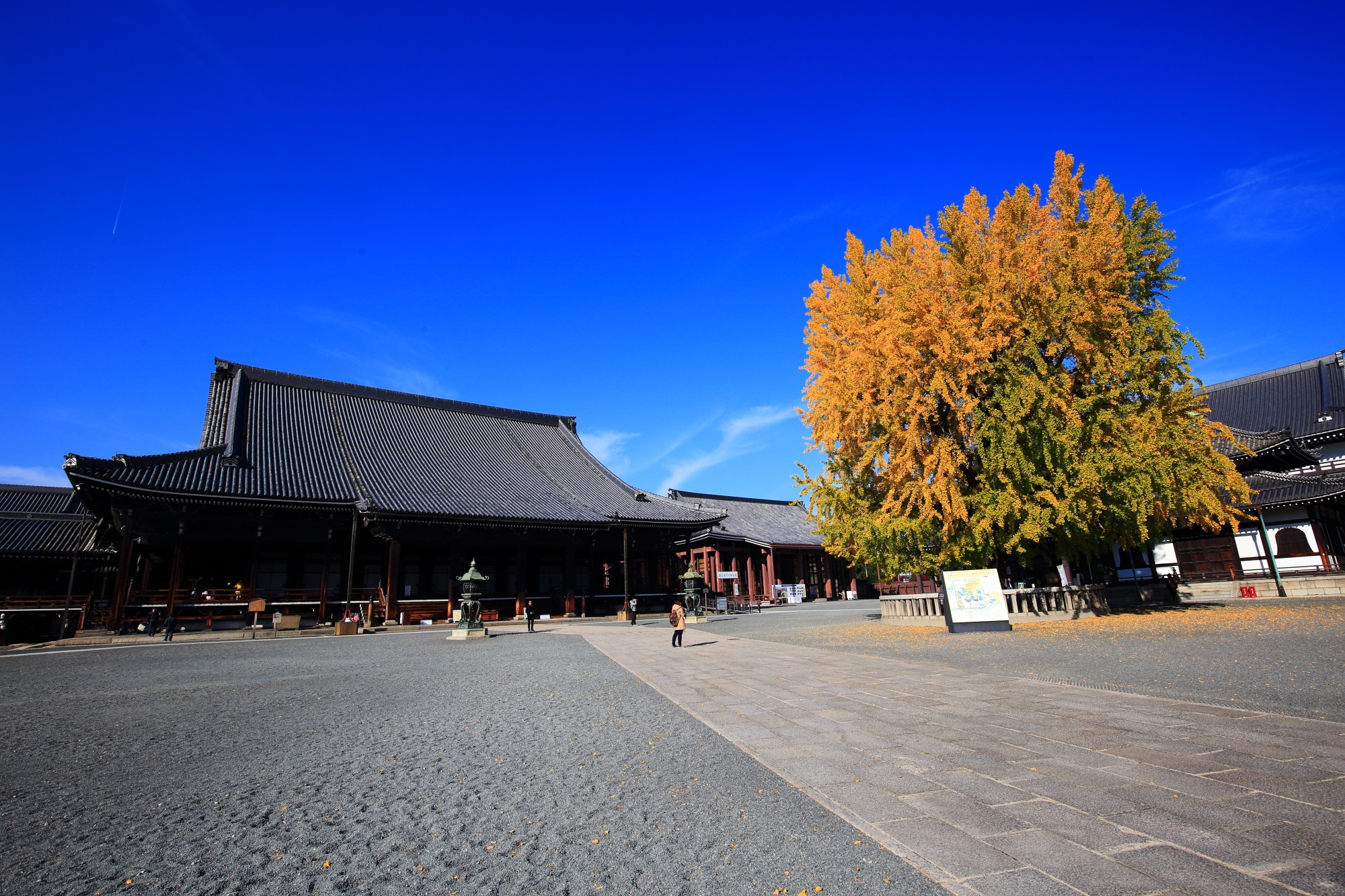 西本願寺の阿弥陀堂前の大銀杏の黄葉と青い空