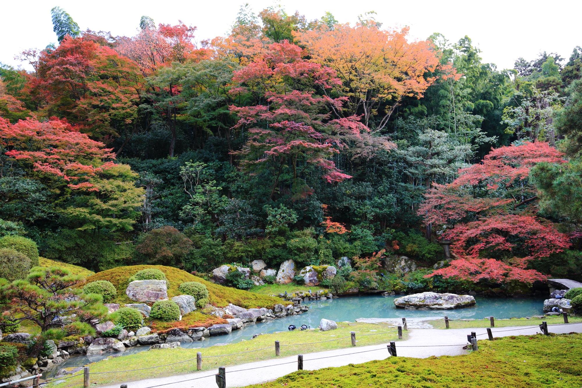 紅葉の名所の青蓮院の相阿弥の庭の色とりどりの見ごろの紅葉
