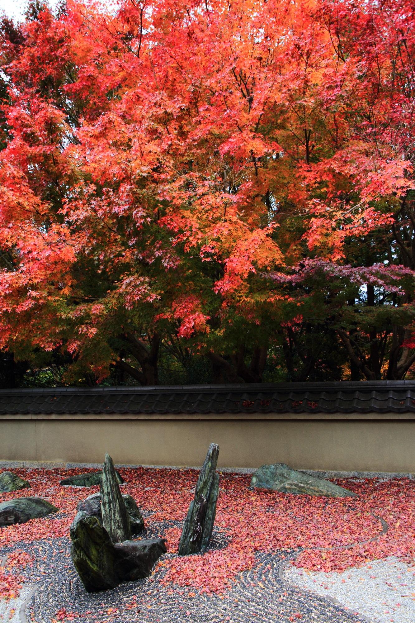 龍吟庵の龍の庭(西庭)の華やかな紅葉と飛び出す龍