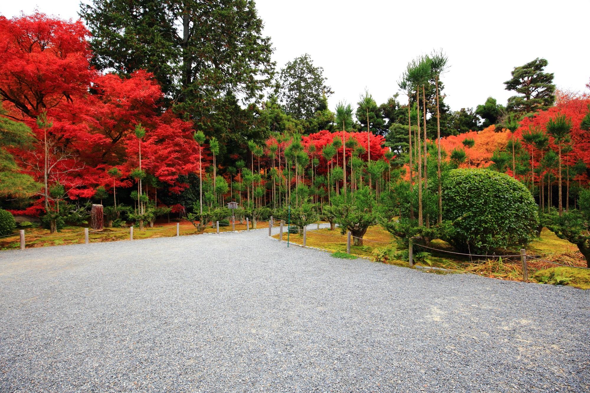 もみじの名所の龍安寺(りょうあんじ)の納骨堂前の綺麗な紅葉