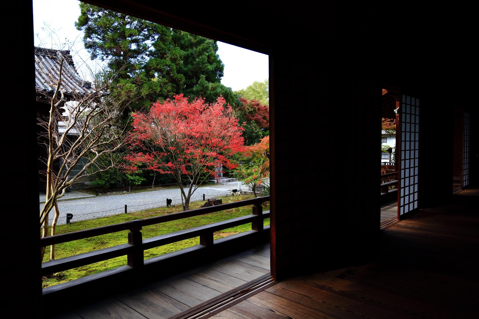 青蓮院の宸殿横の鮮やかな紅葉