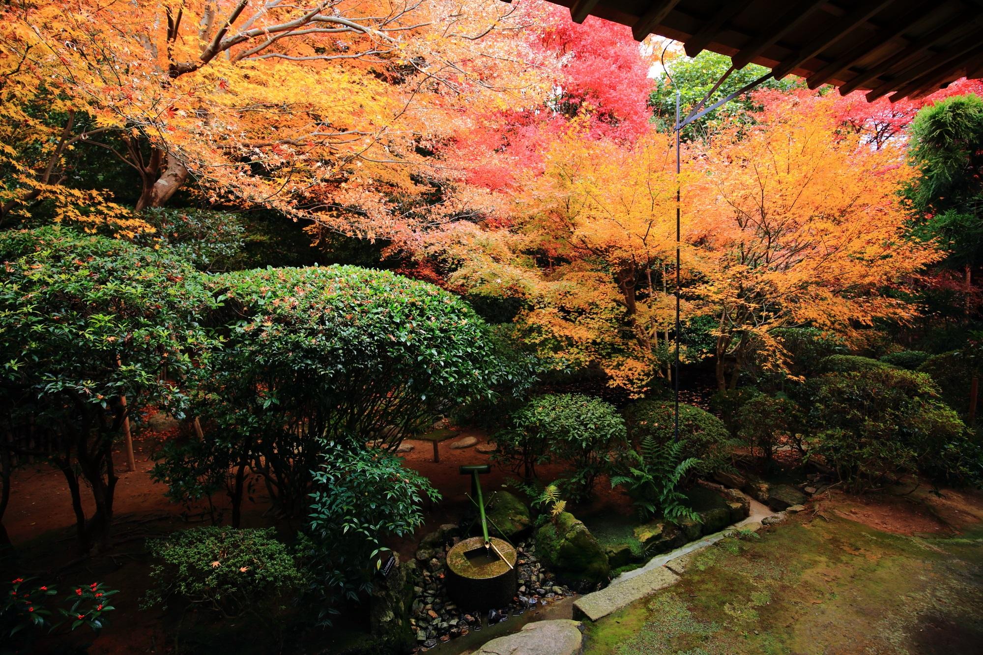 龍安寺の方丈の紅葉とつくばい