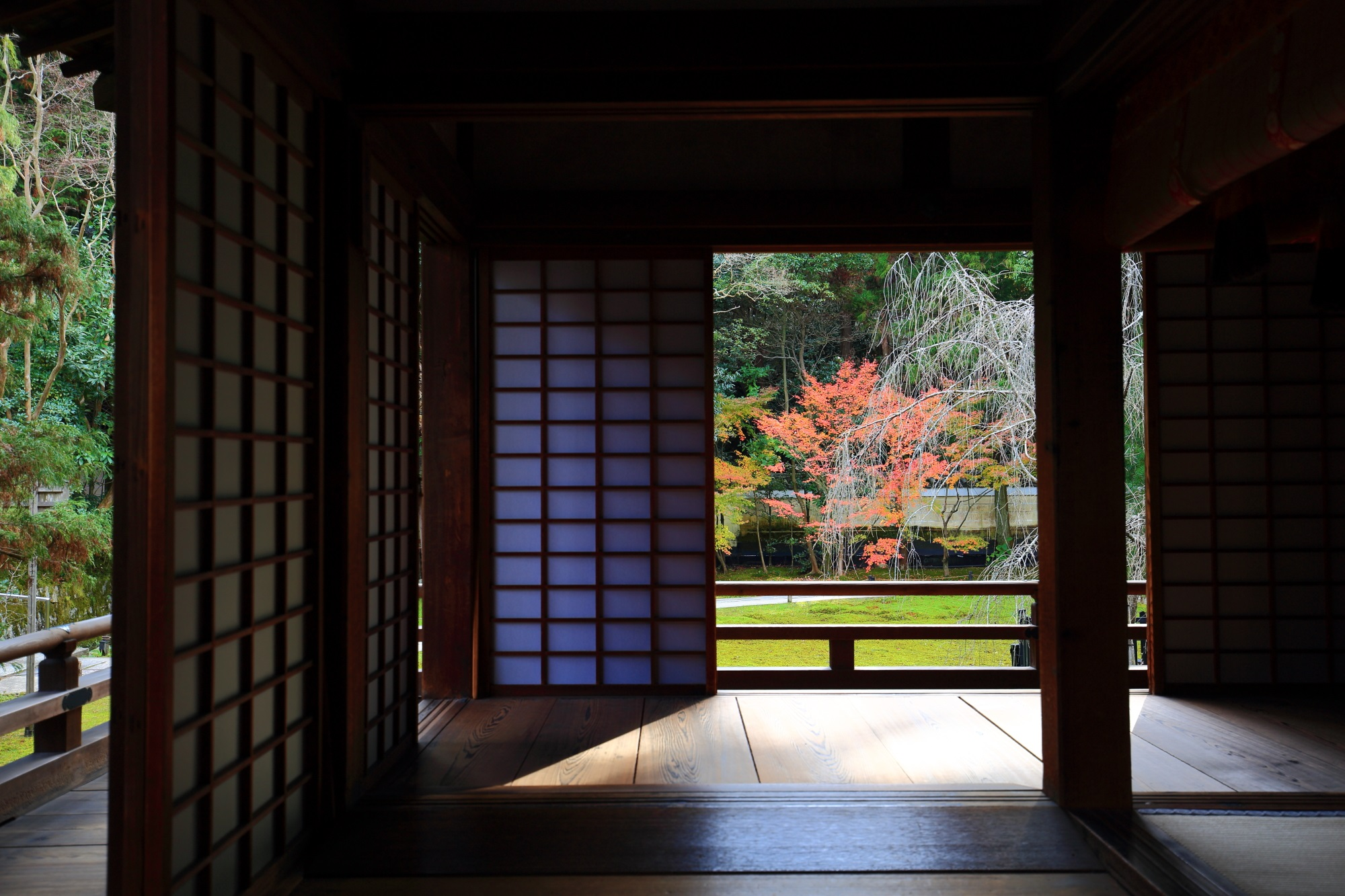 もみじの名所の青蓮院の宸殿から眺めた紅葉