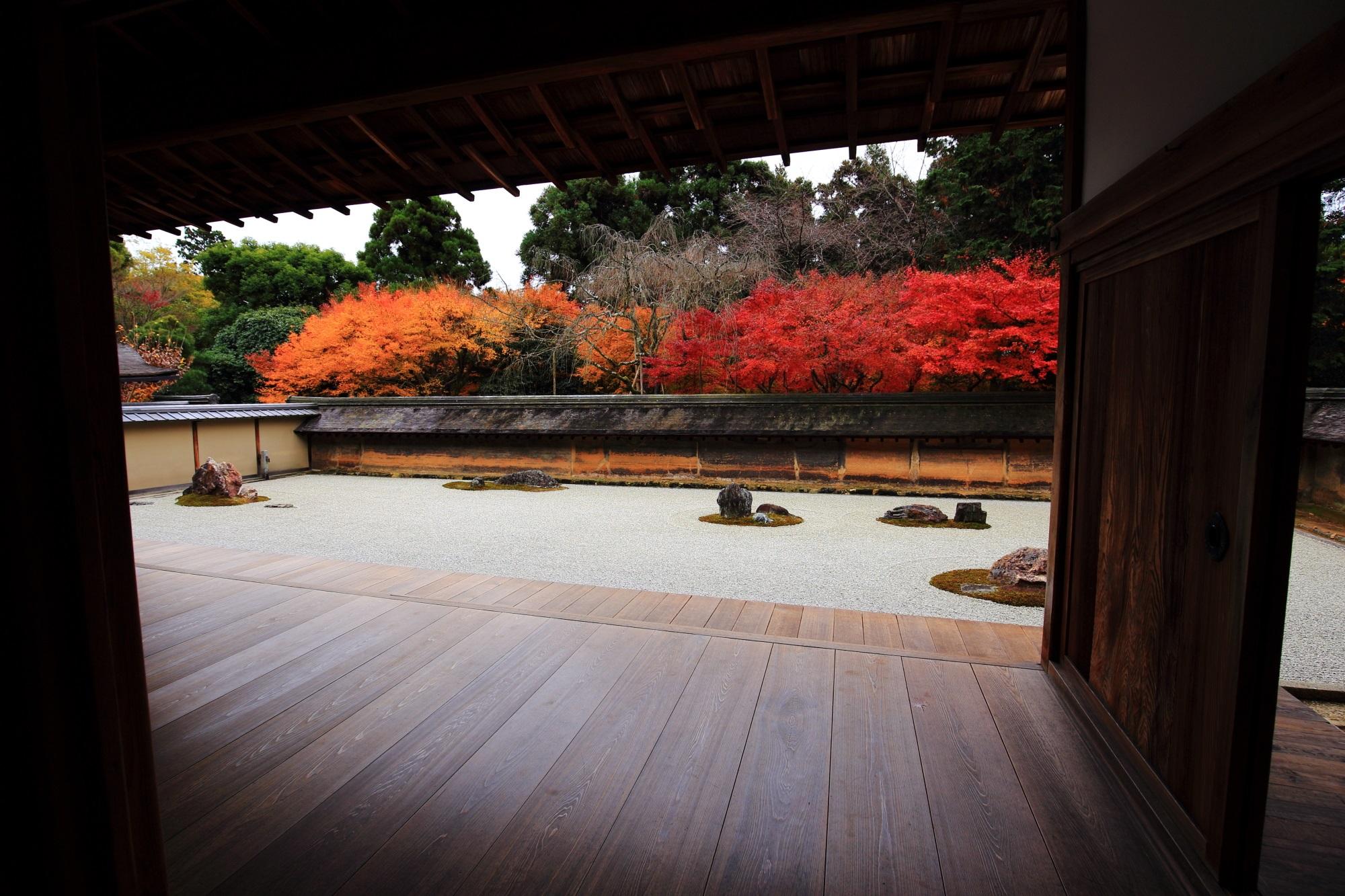 龍安寺の石庭の見事な二色の紅葉