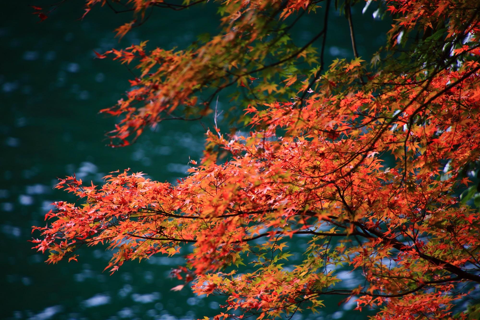 紅葉の名所の宇治川の綺麗な紅葉