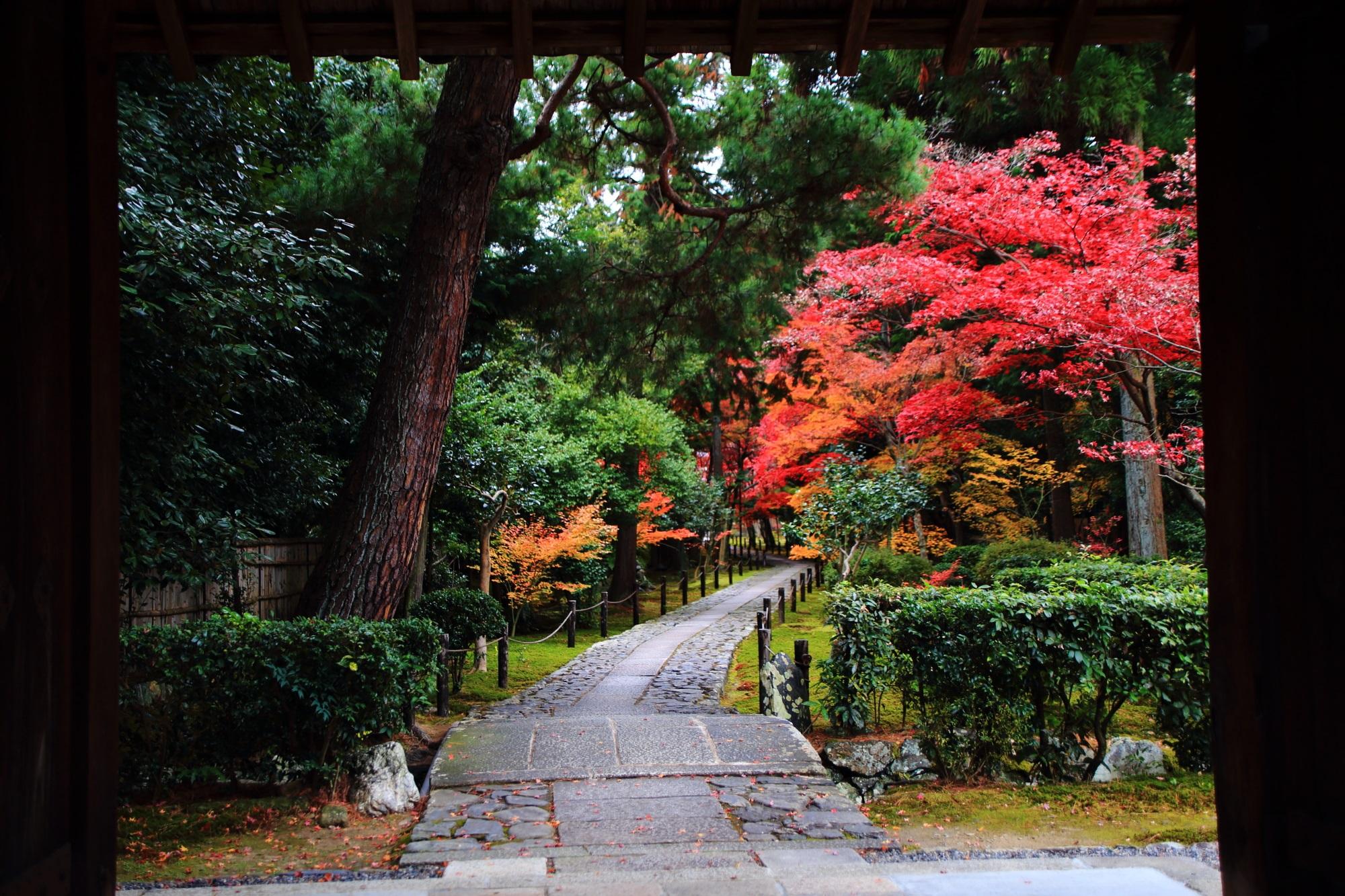 鹿王院の中門から眺めた参道の見ごろの紅葉