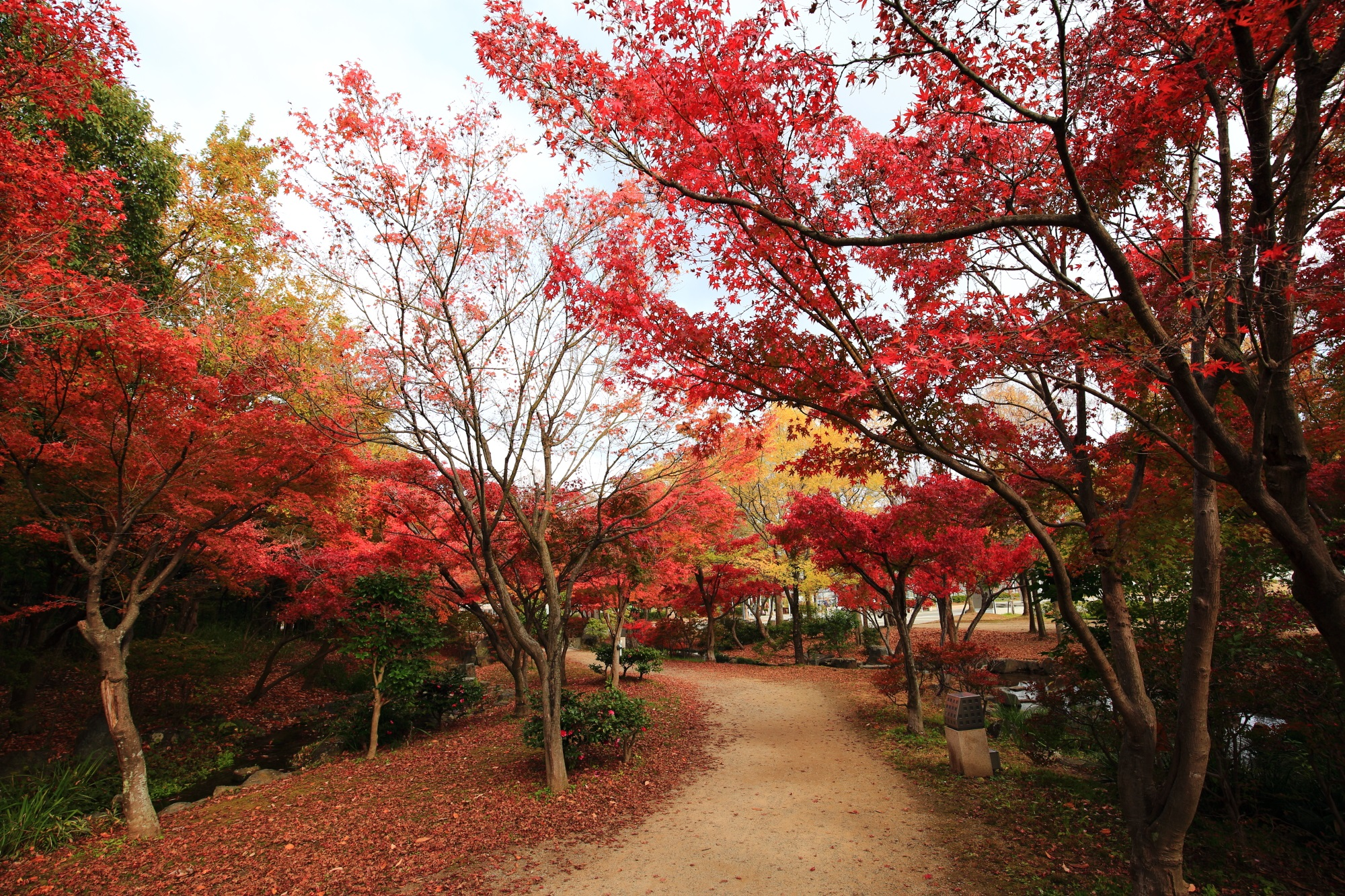 梅小路公園 紅葉 見ごろ 秋 12月