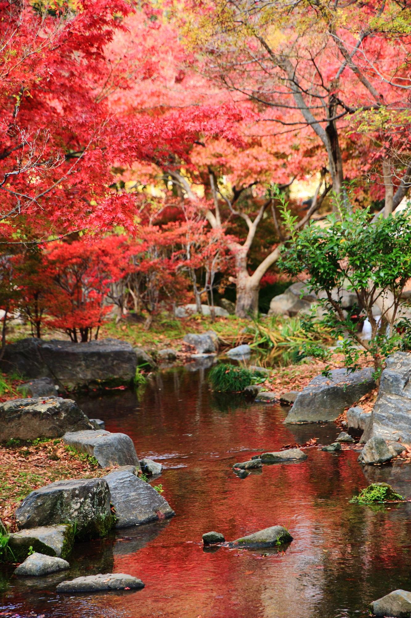 梅小路公園の見ごろの華やかな紅葉と綺麗な水鏡