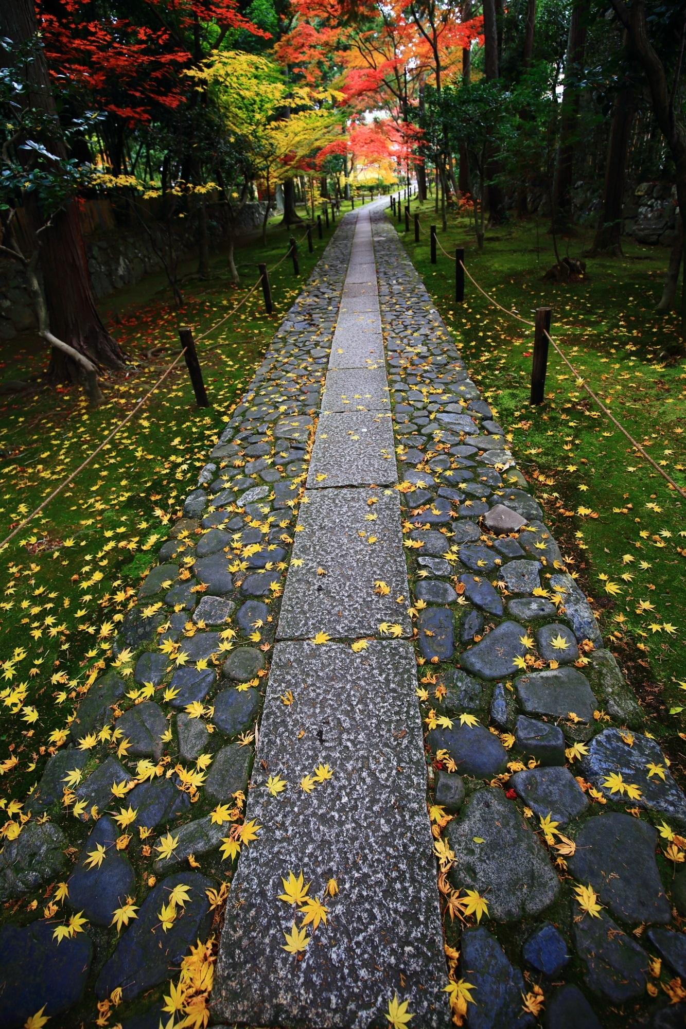 鹿王院(ろくおういん)の参道の鮮やかな散り紅葉