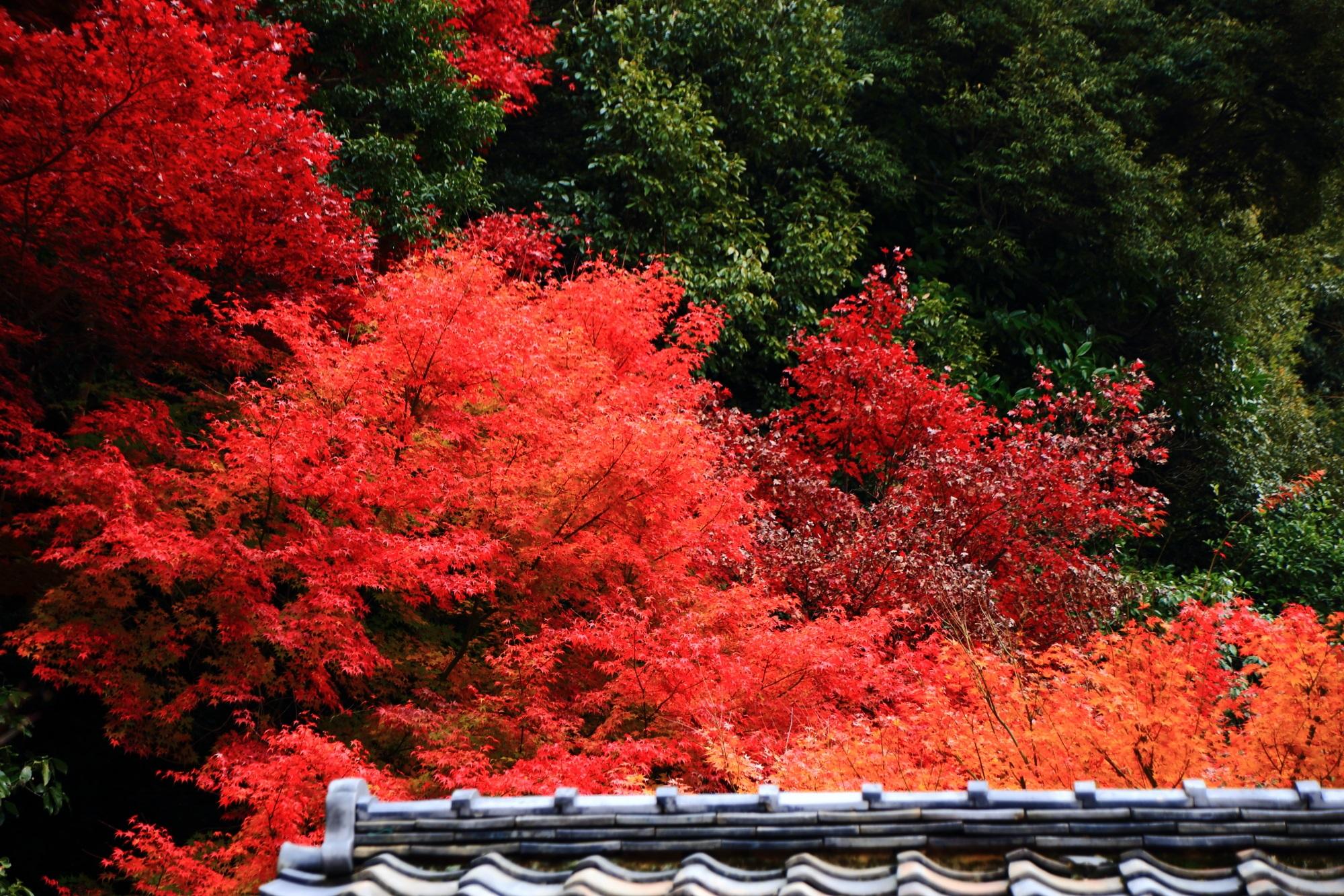 龍吟庵の不離の庭の見ごろの美しい紅葉