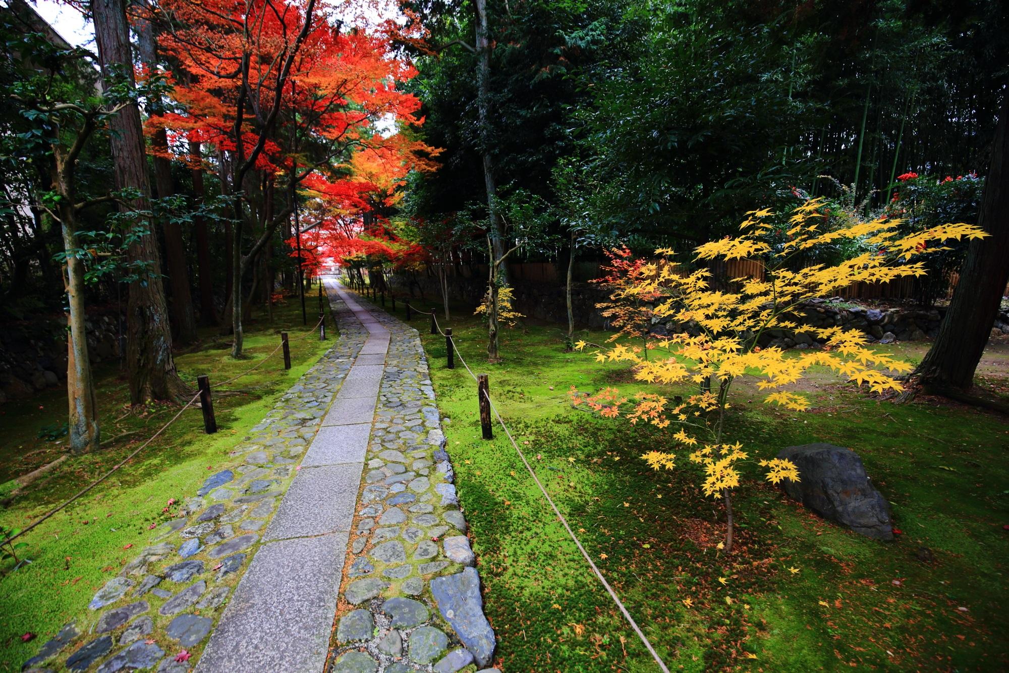 嵐山の鹿王院の参道の苔と見ごろの美しい紅葉