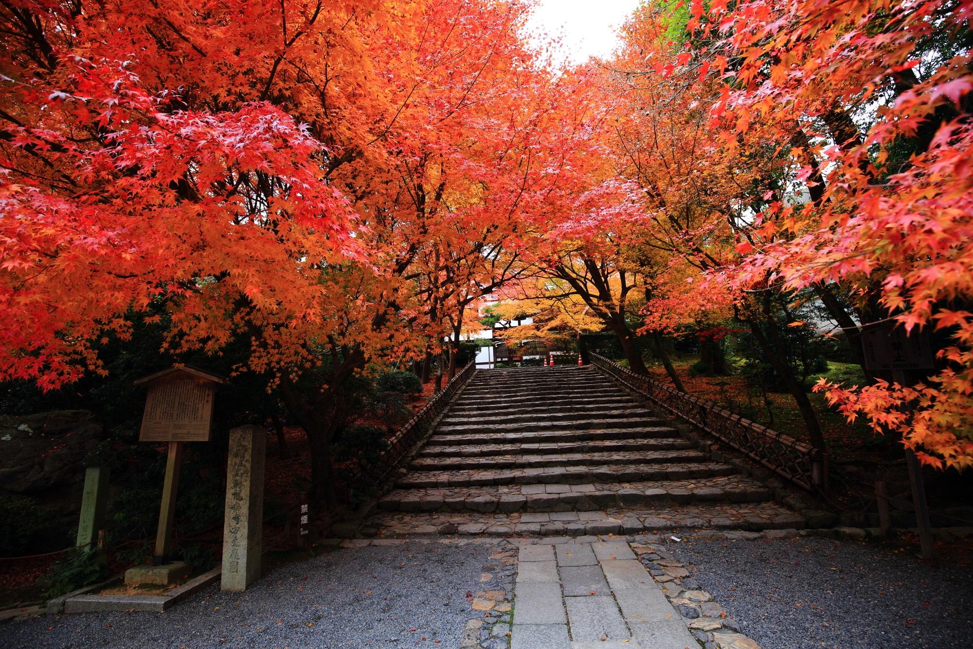世界遺産の龍安寺の見所の多い紅葉