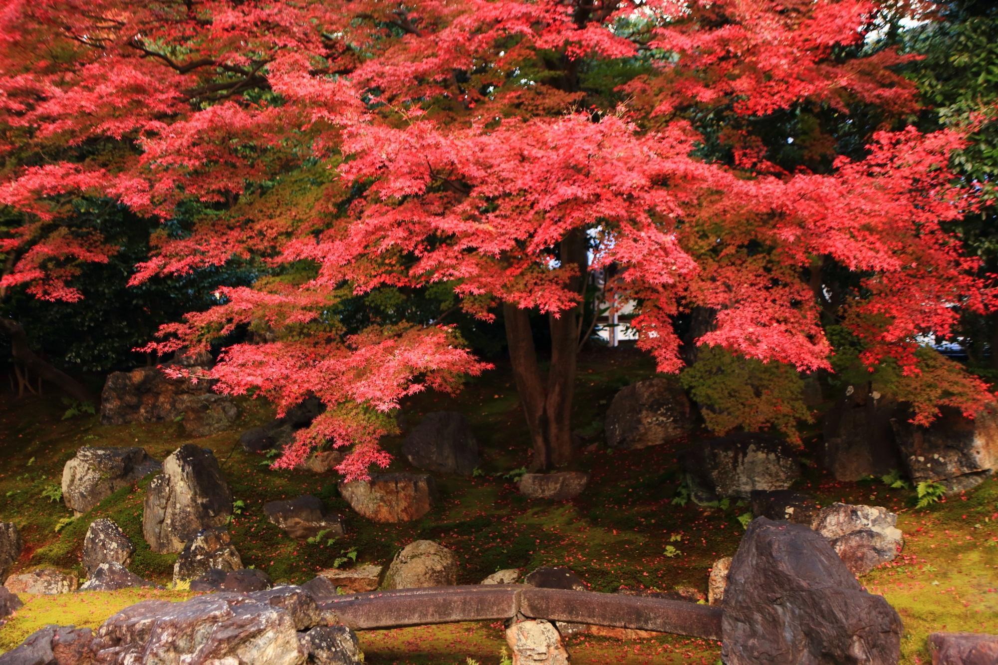Kyoto Entokuin-Temple colored leaves 見ごろ 秋 高台寺 ねね