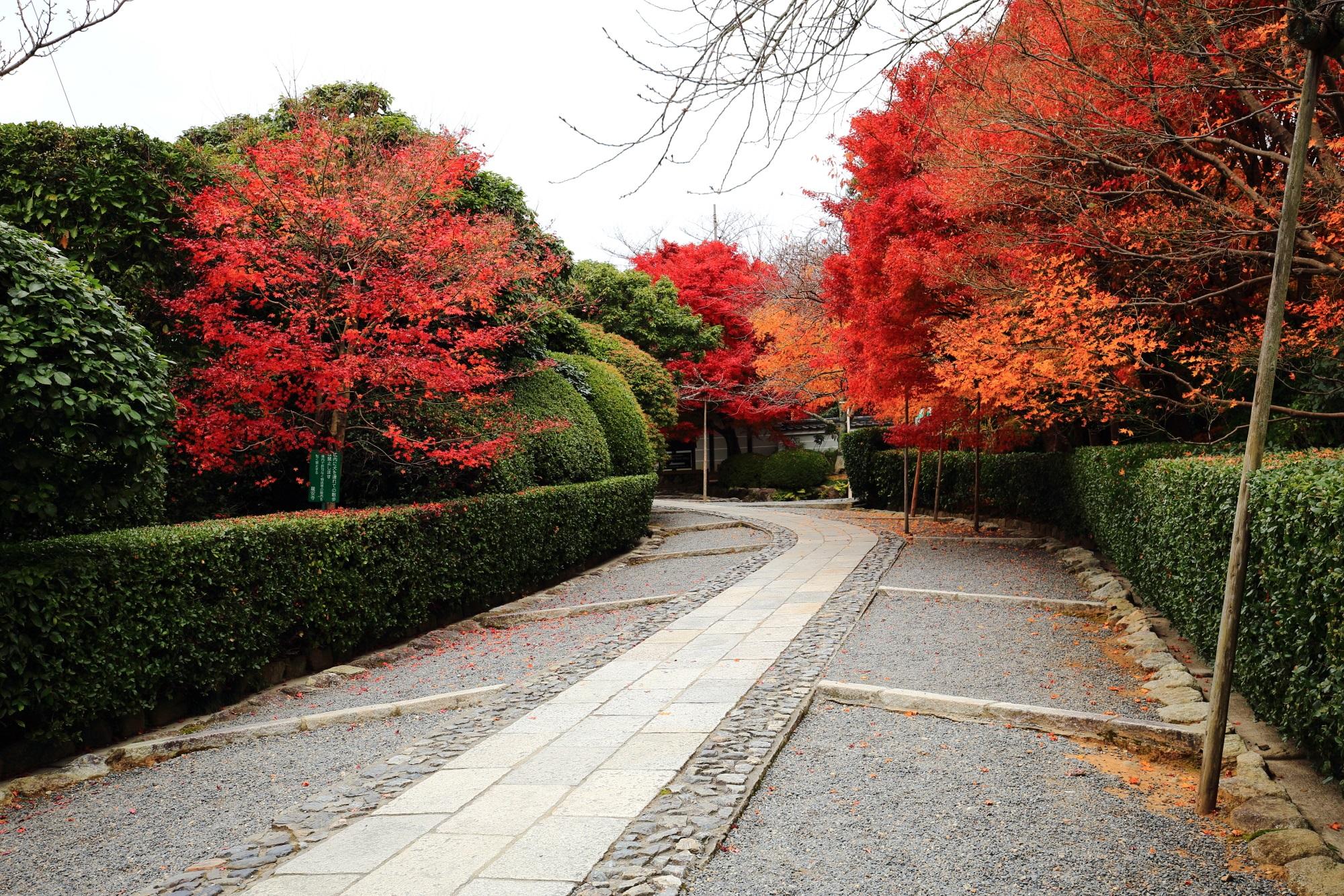 龍安寺の山門前の参道の紅葉