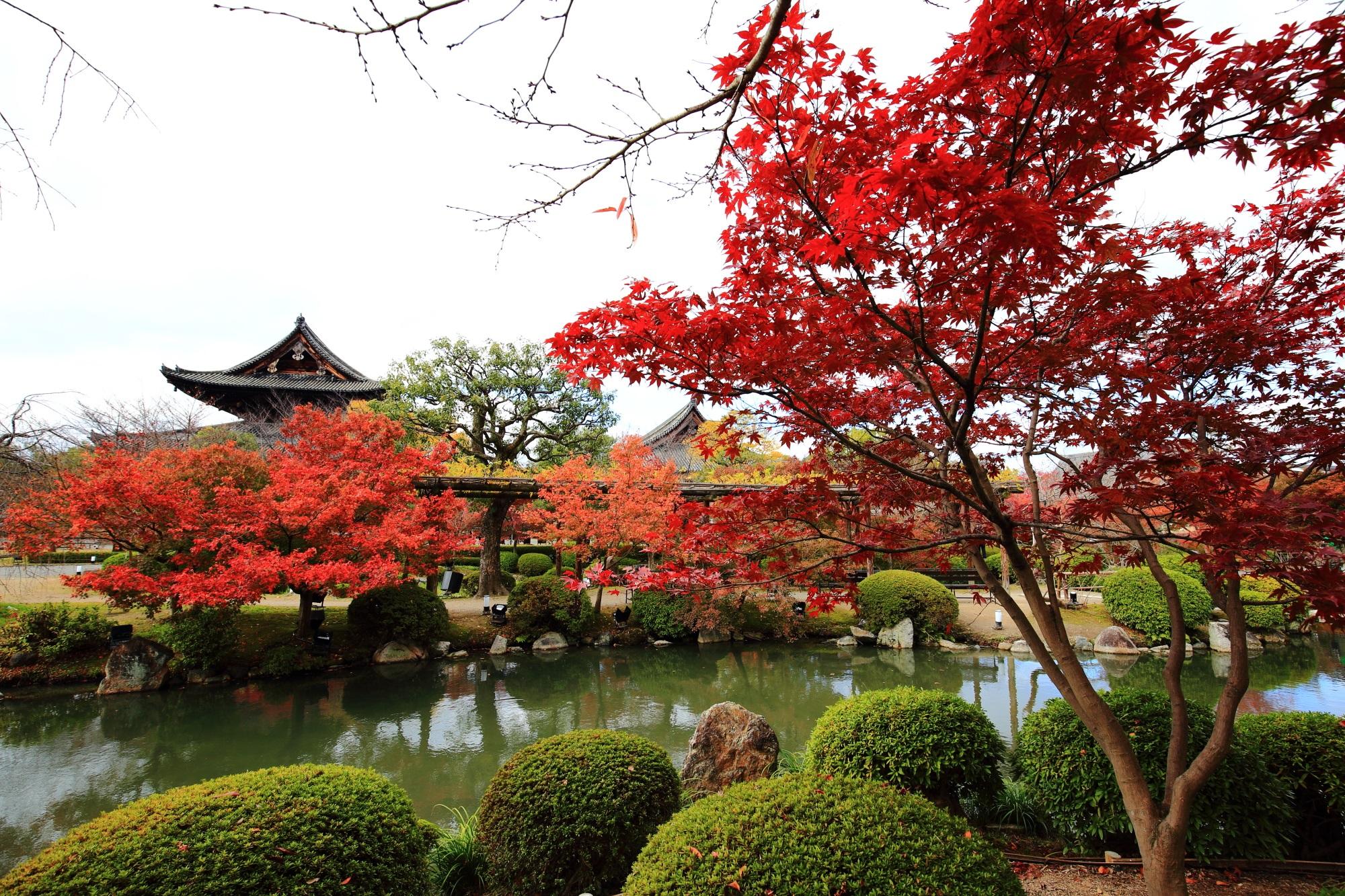 To-ji Temple Kyoto 紅葉 見ごろ 秋 金堂 講堂 瓢箪池