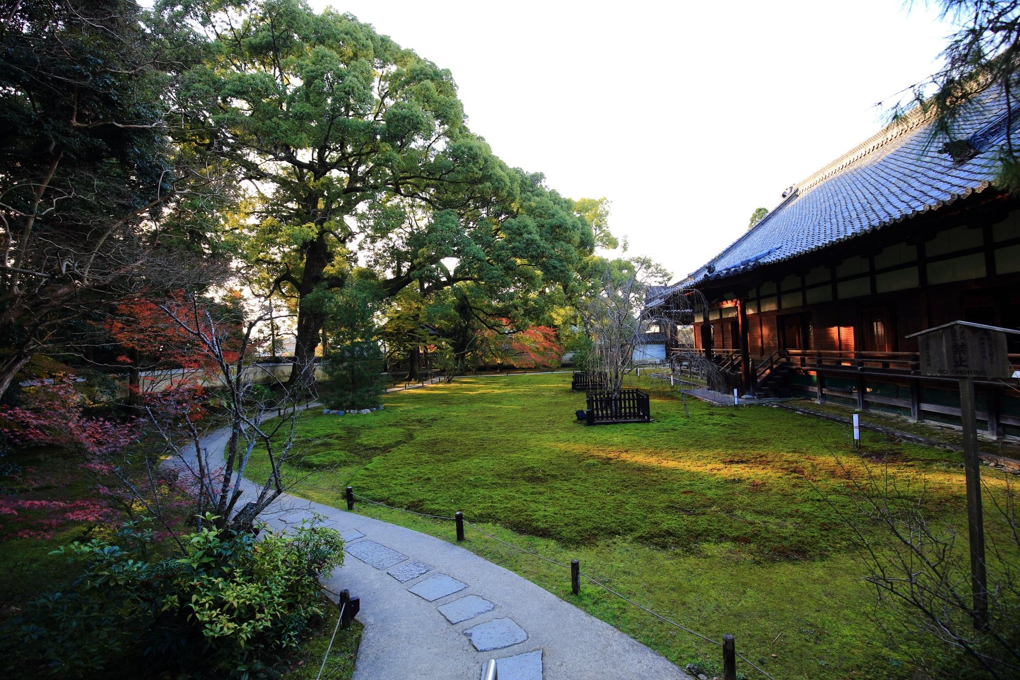 青蓮院の宸殿と苔のクスノキの庭園