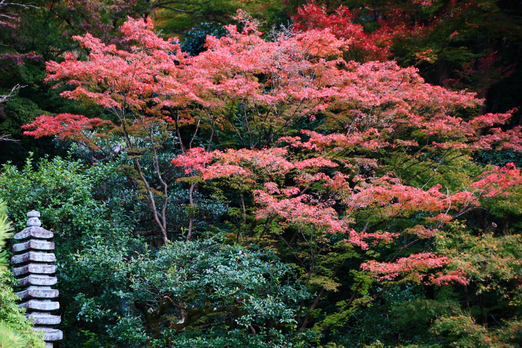 美しい紅葉につつまれた青蓮院門跡の相阿弥の庭