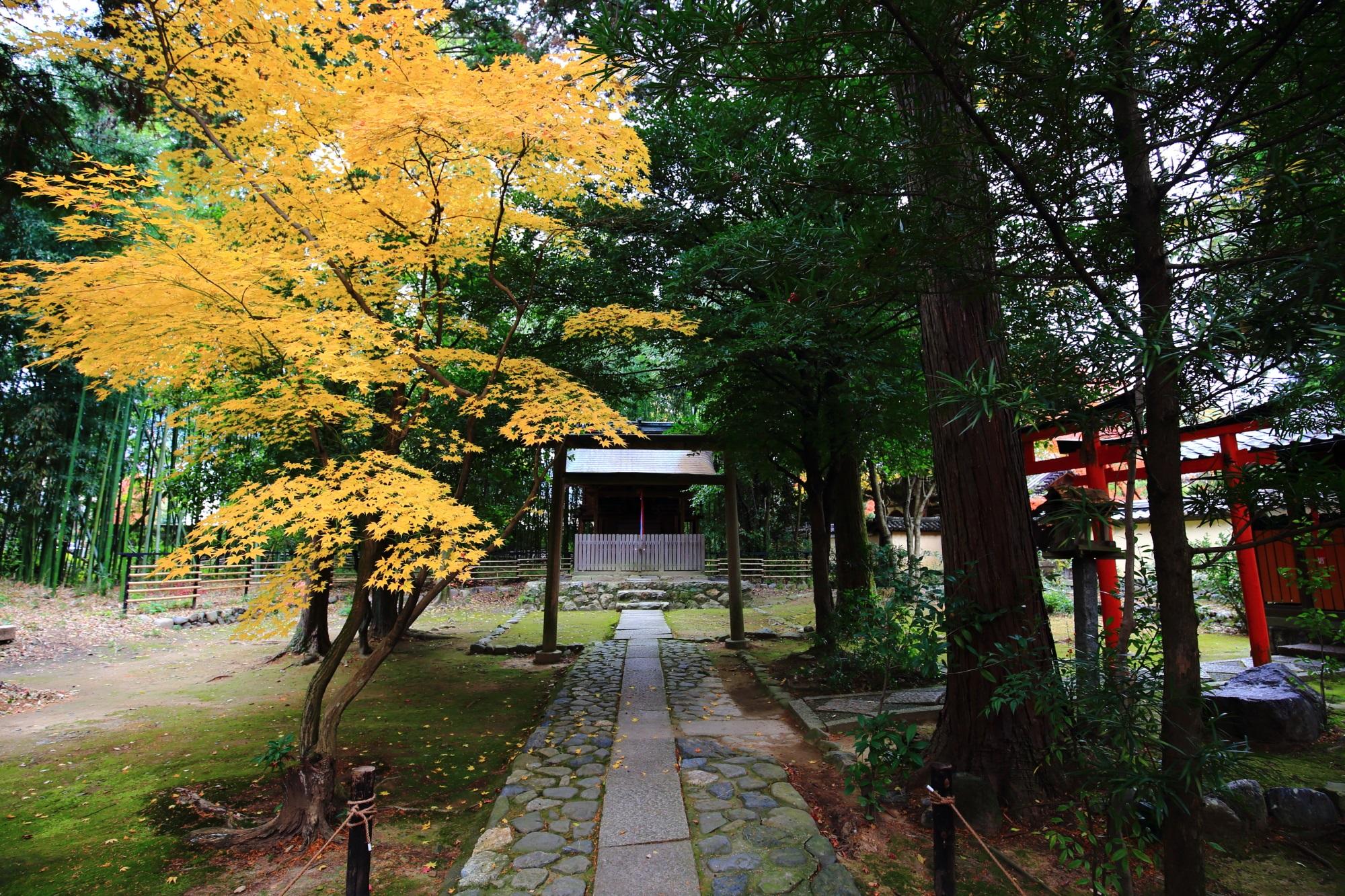 鹿王院の春香稲荷大神の見ごろの紅葉